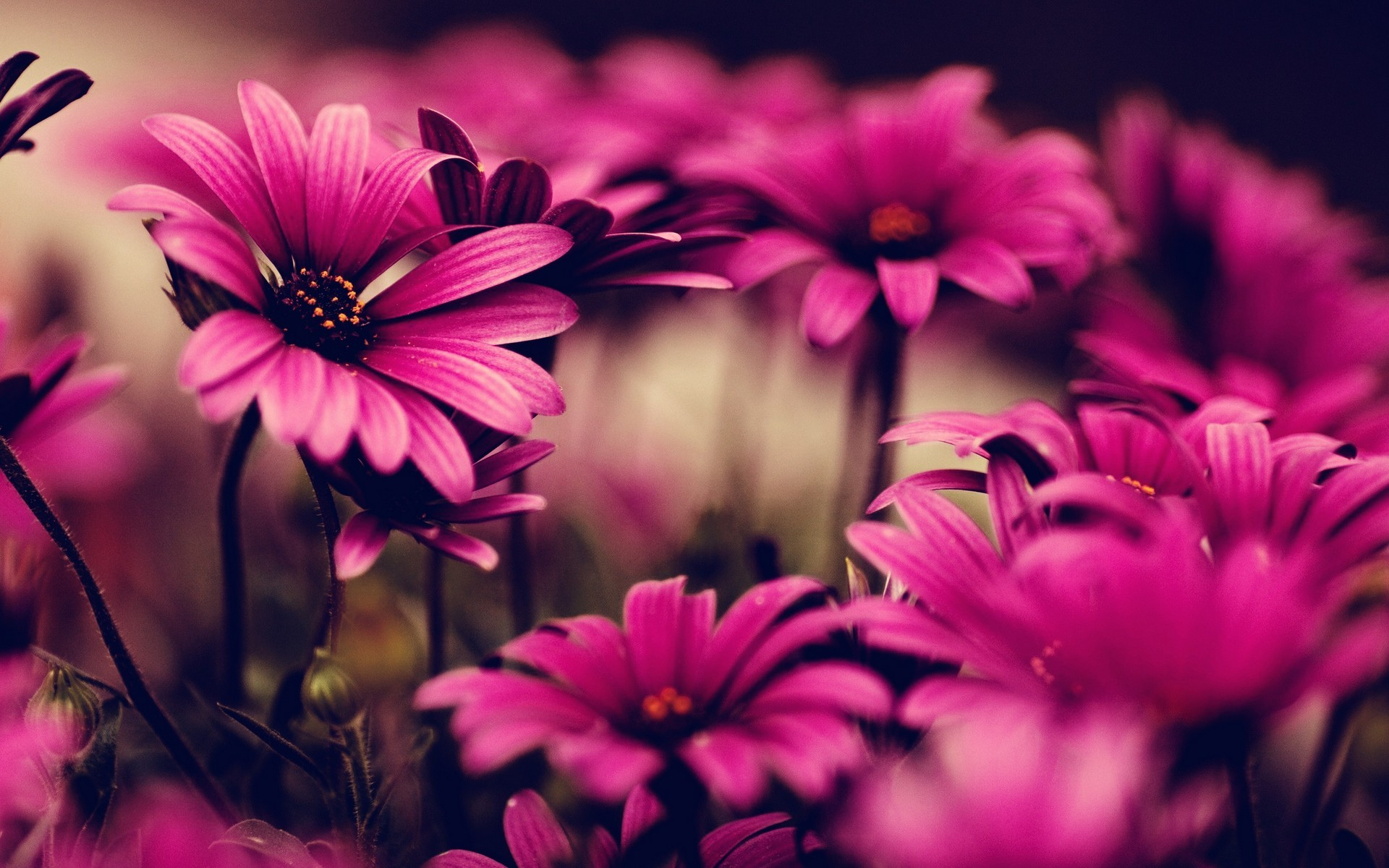Flower Desktop Backgrounds 183 ①
