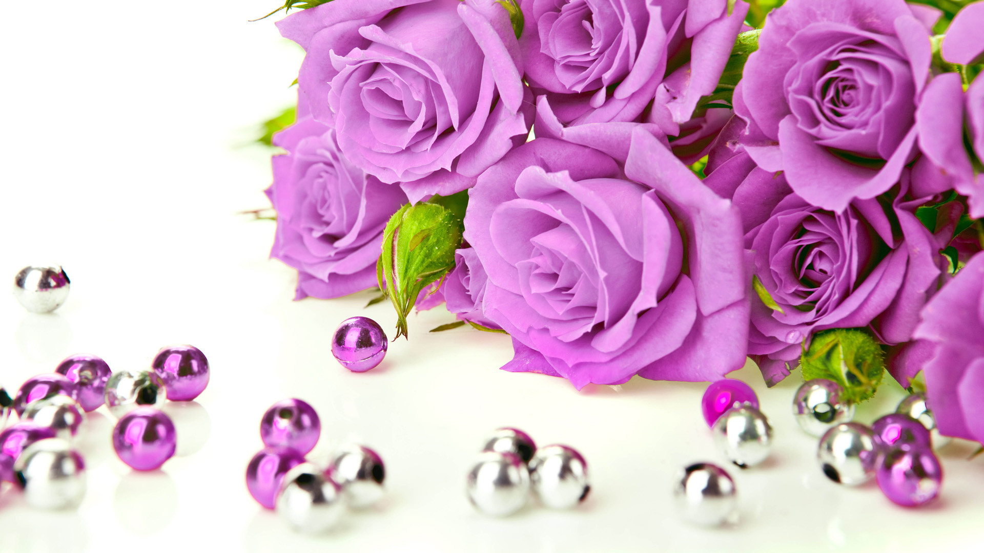 Purple Roses Wallpapers 1