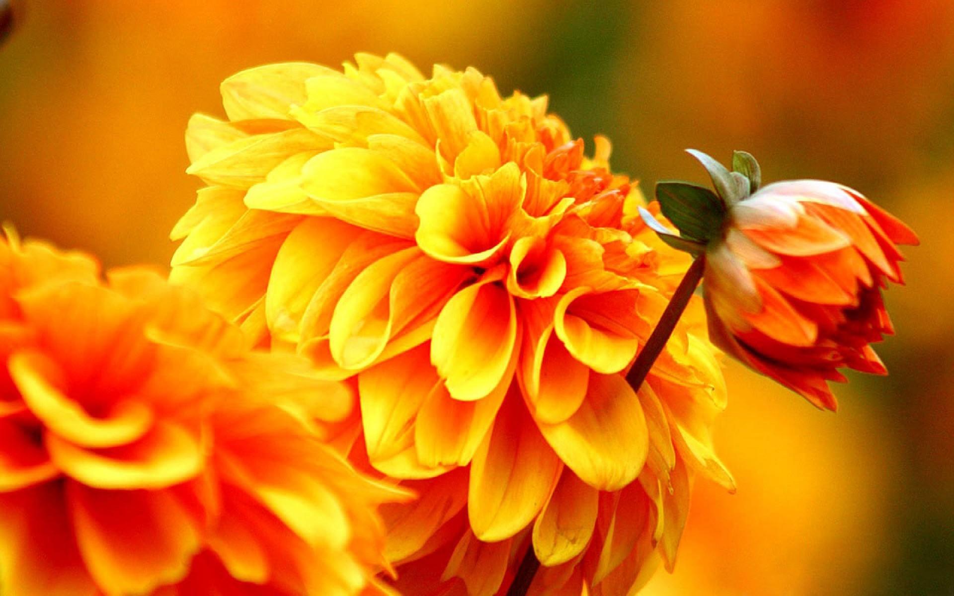 Fall Flowers Wallpaper