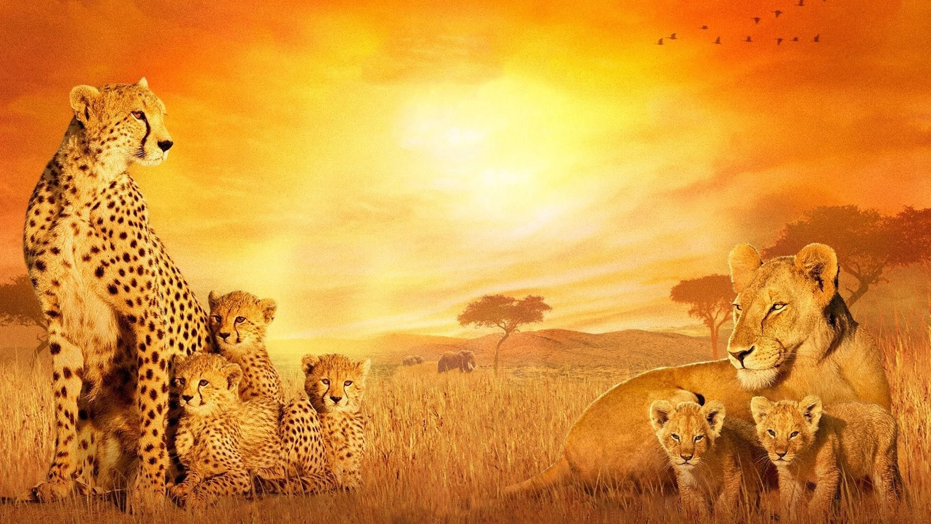 Hd Animal Wallpapers Hd Music Wallpapers: African Background ·① Download Free Stunning Wallpapers