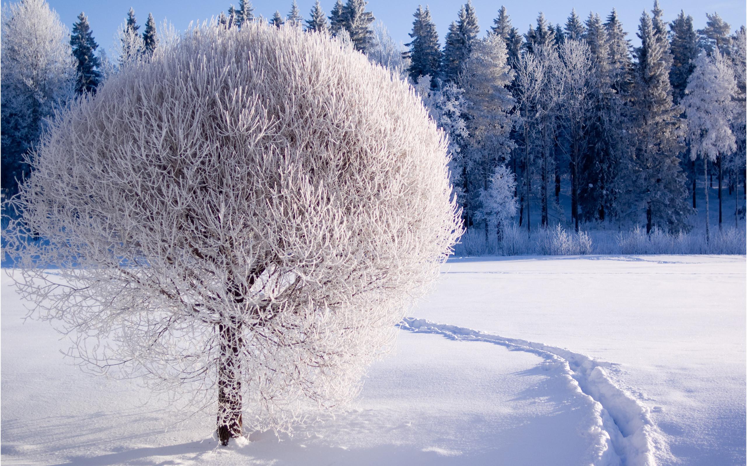 Desktop Wallpaper Winter Scenes ·① WallpaperTag
