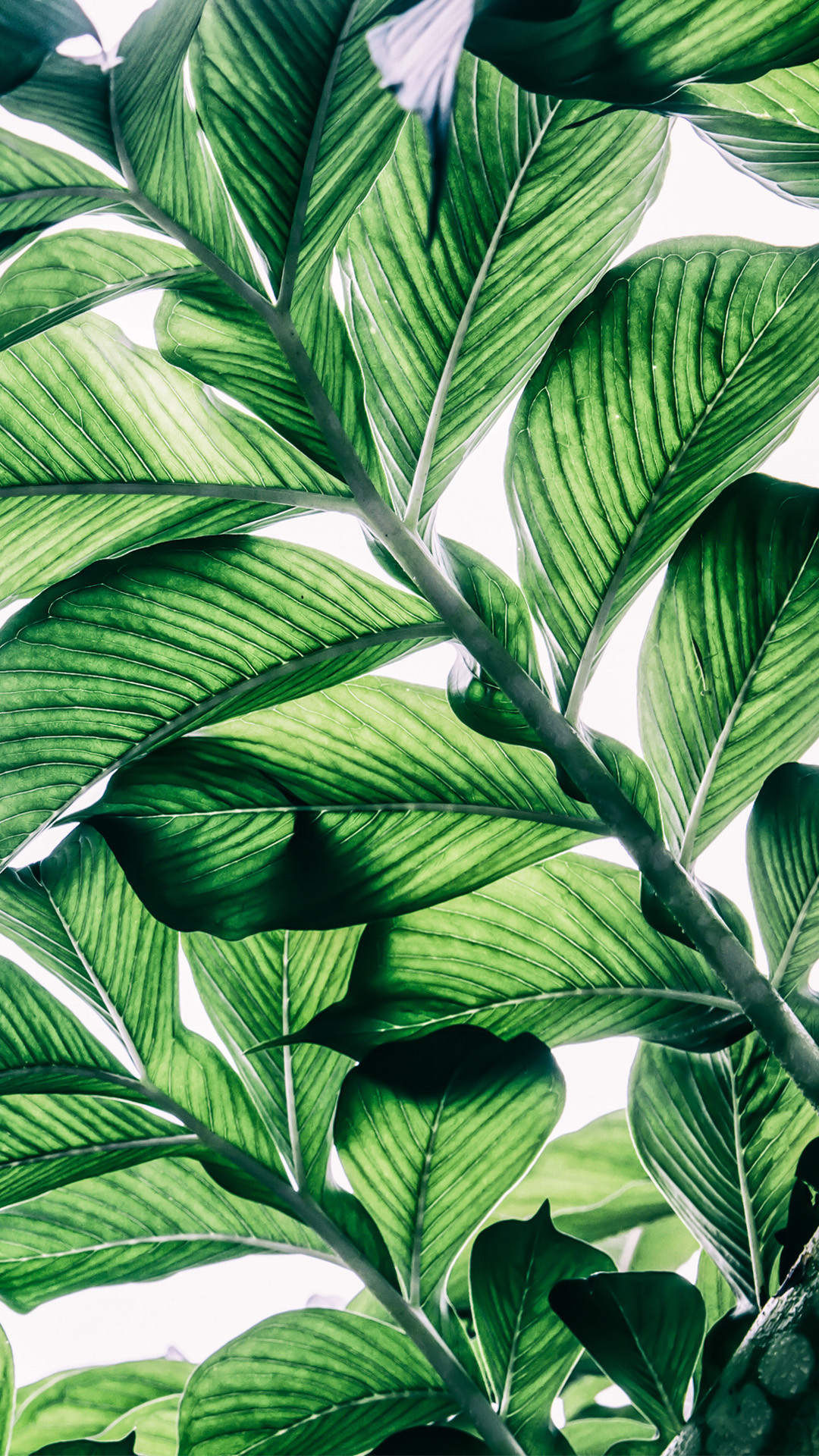 Pretty Green Backgrounds ① Wallpapertag