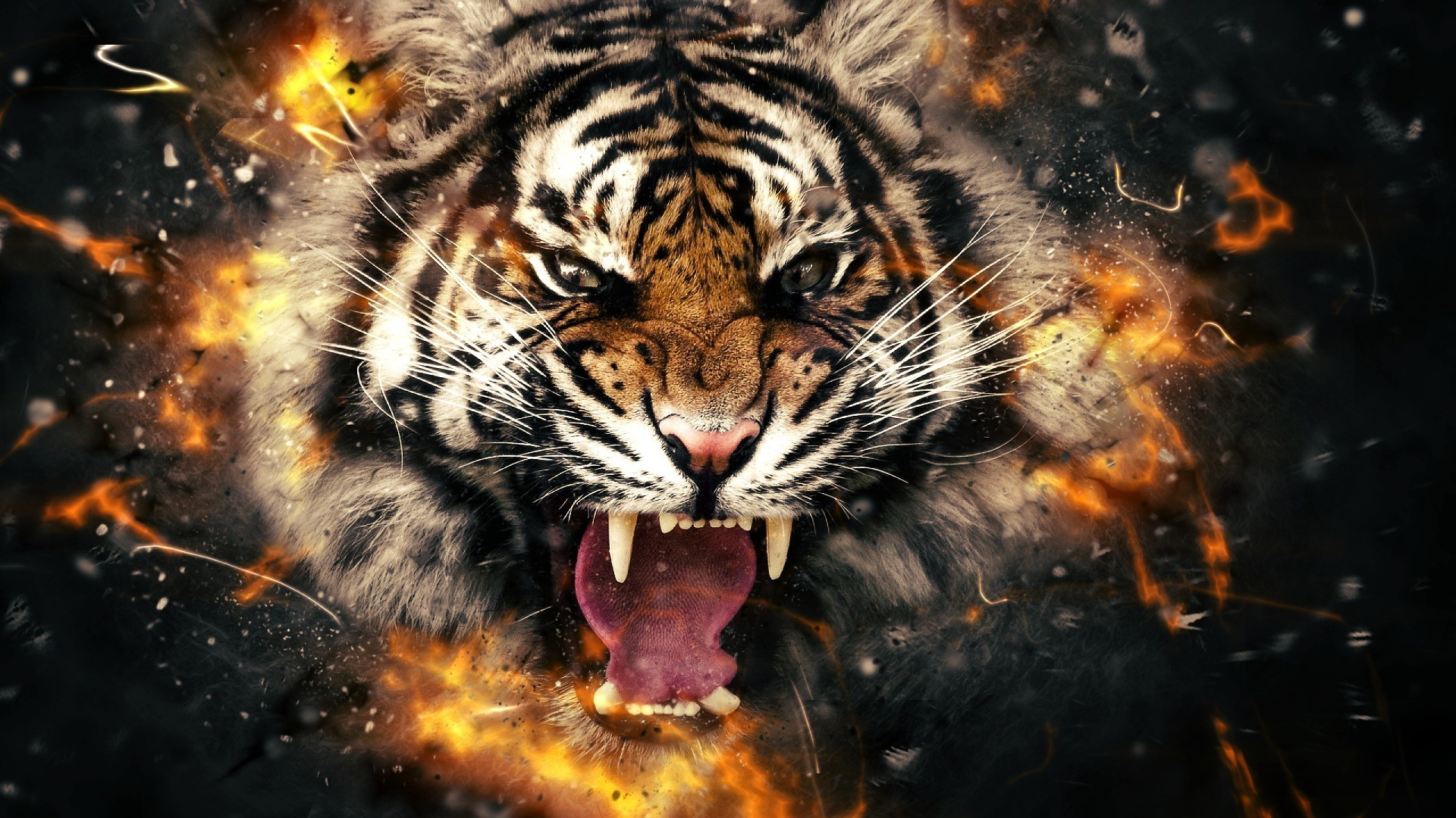 Tiger Face Wallpaper ·①