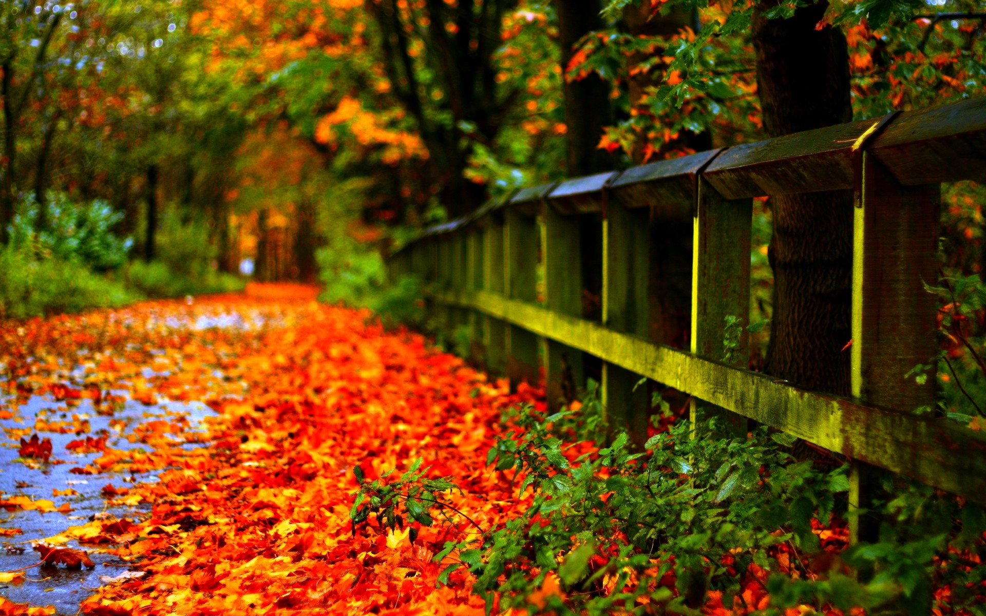 fall leaves backgrounds 183��