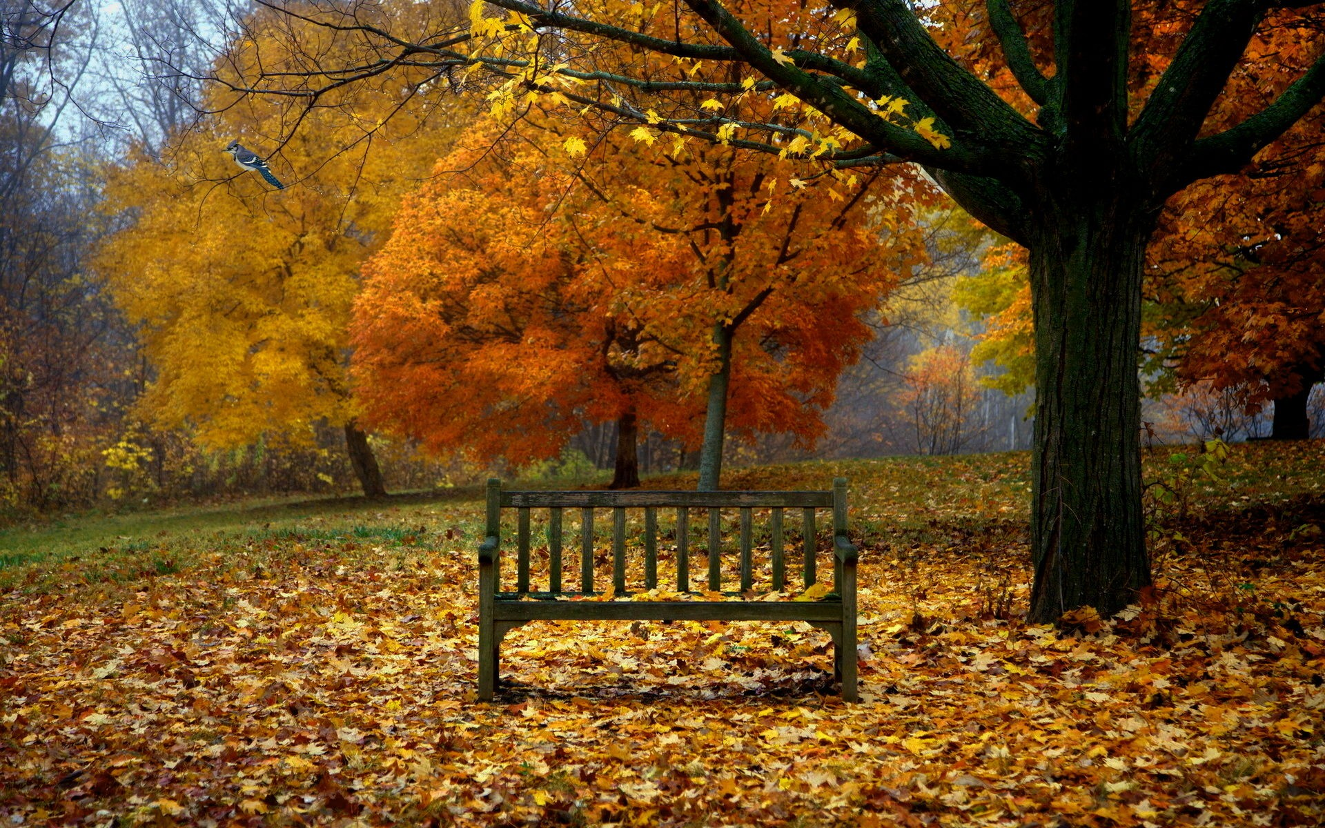 fall background images download free cool full hd backgrounds