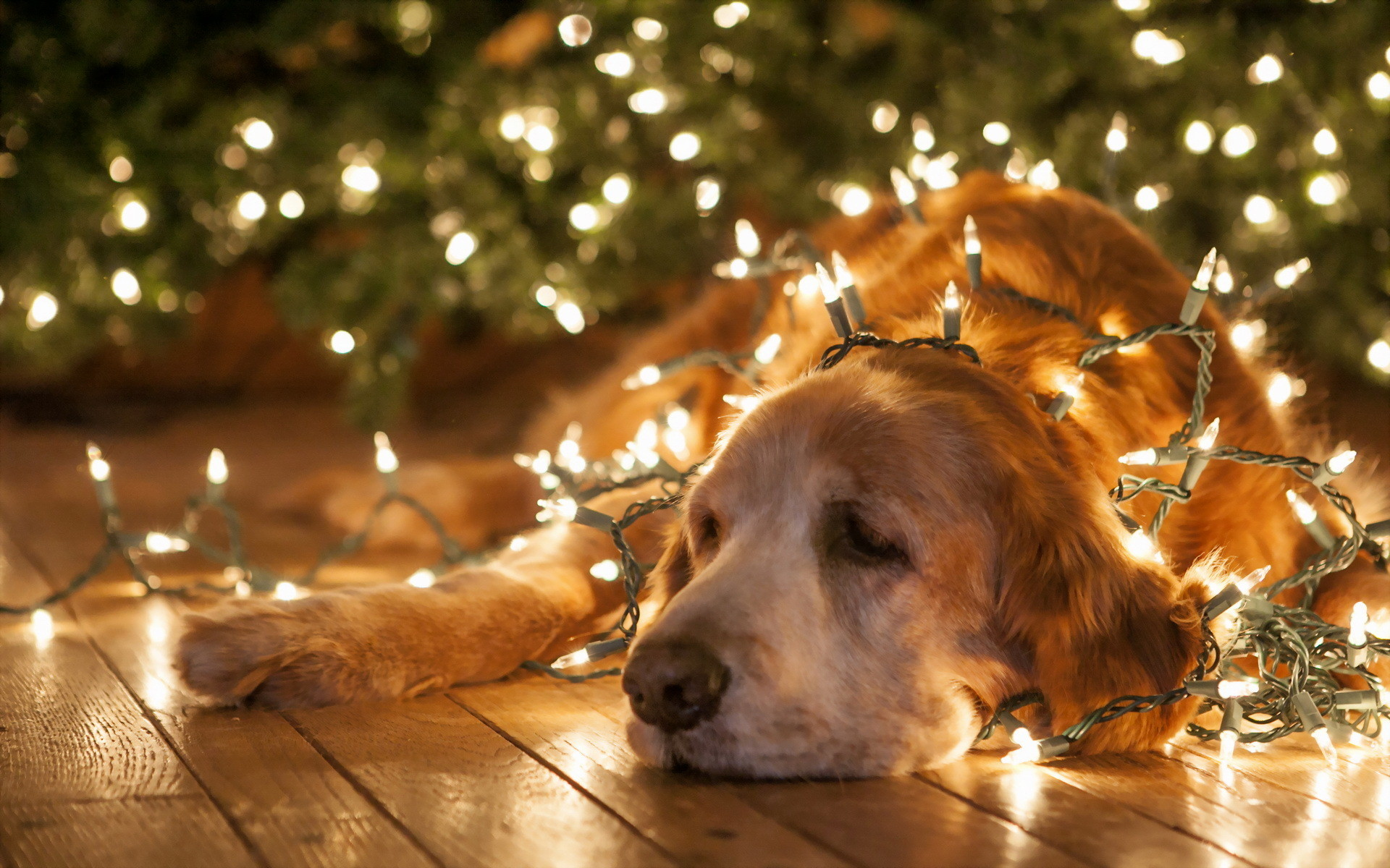 Funny christmas desktop backgrounds 1920x1200 christmas new year lights bright animals dogs humor funny wallpaper download voltagebd Image collections