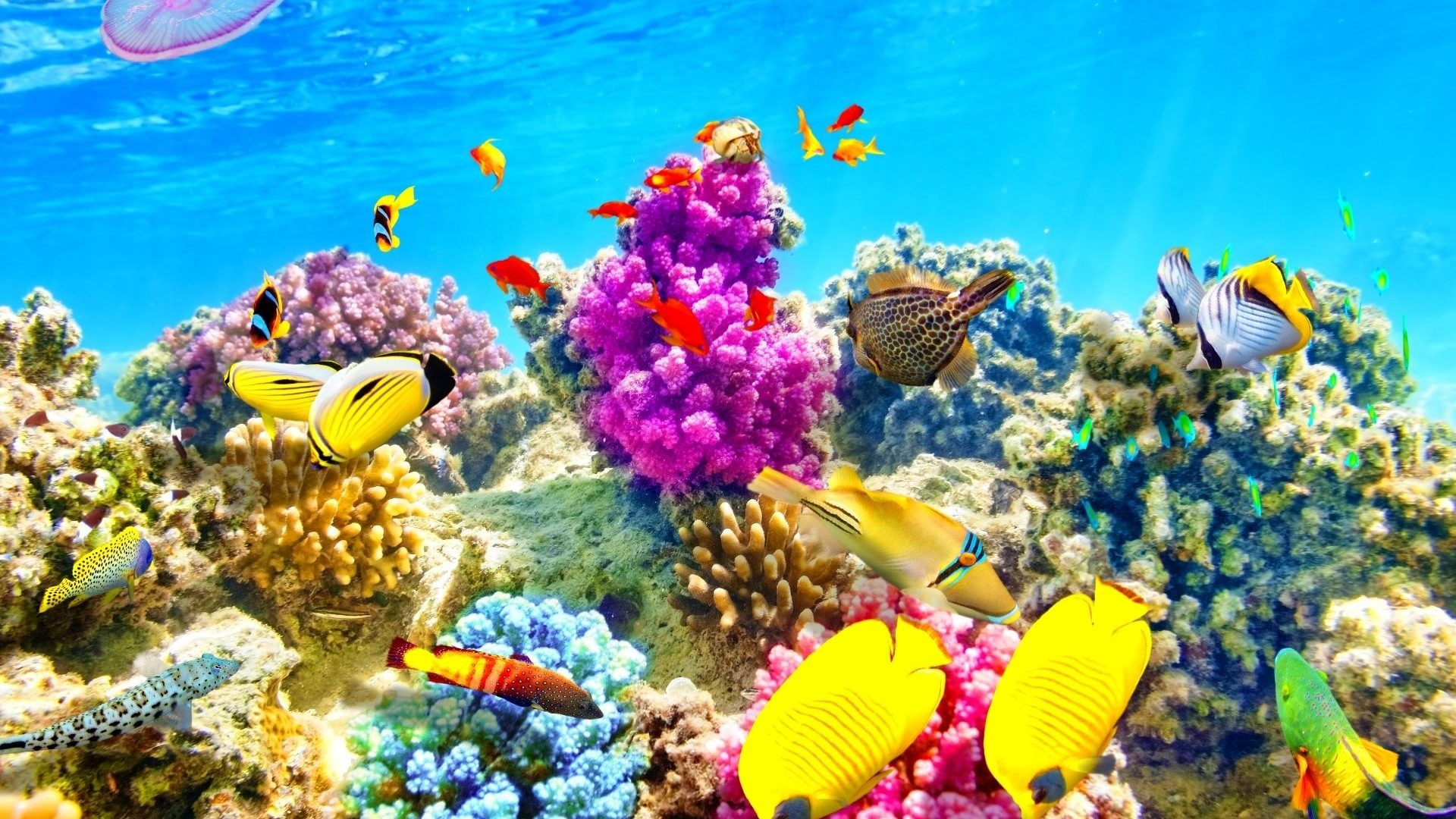Tropical fish backgrounds wallpapertag - Underwater desktop background ...