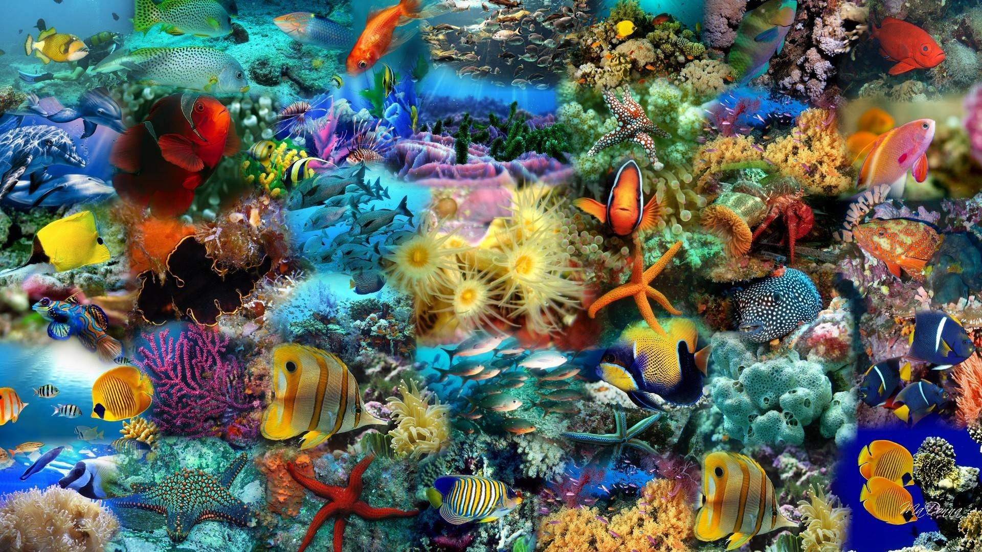 Cool Fish Backgrounds HD Wallpapers Download Free Images Wallpaper [1000image.com]