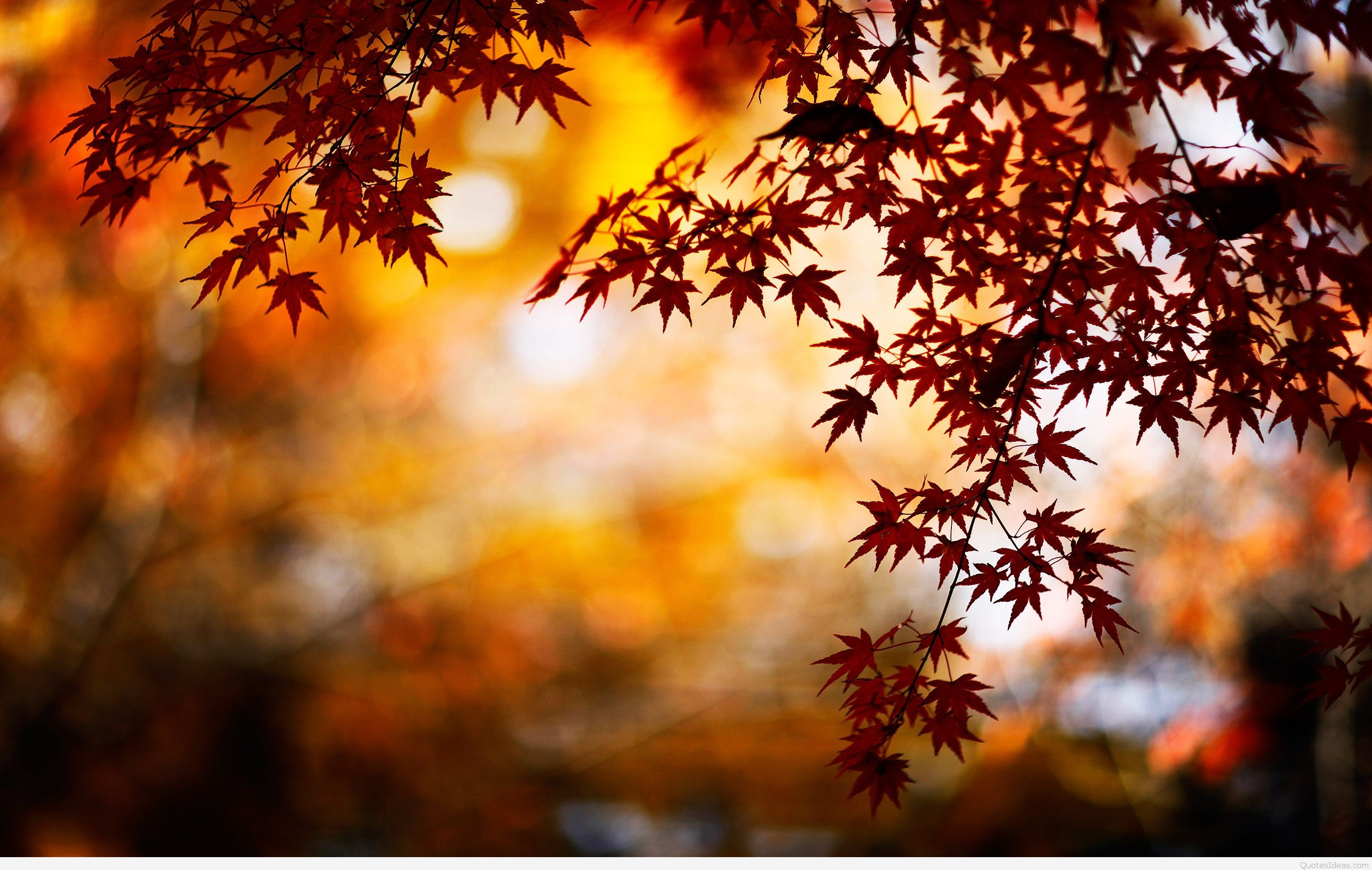 42 Autumn Backgrounds Download Free Stunning Hd