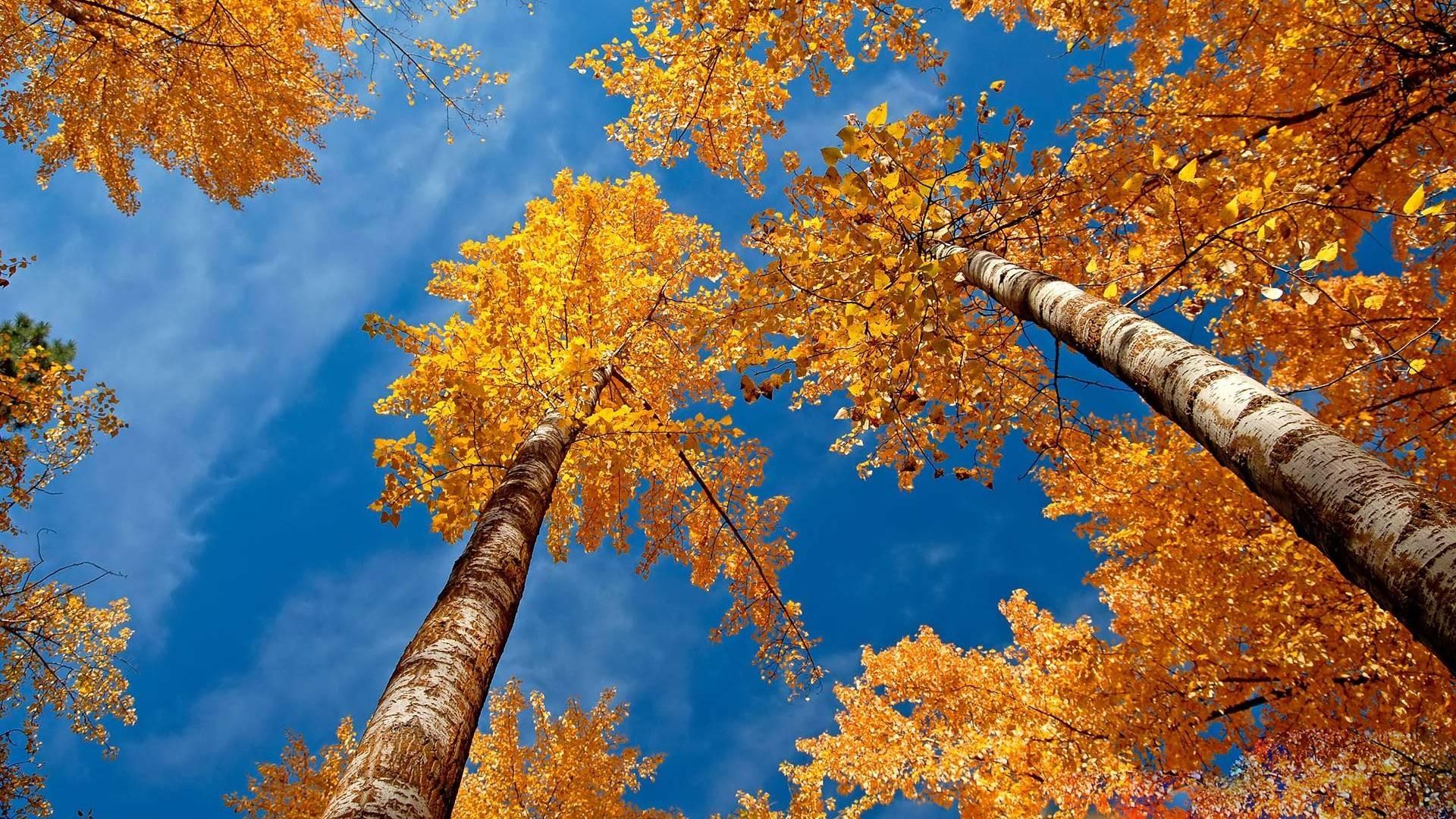 Autumn Desktop Wallpaper ① Download Free Stunning Full Hd