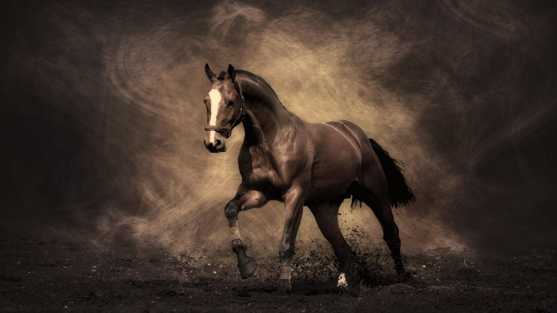 Storm Black Desert Horse Shoes