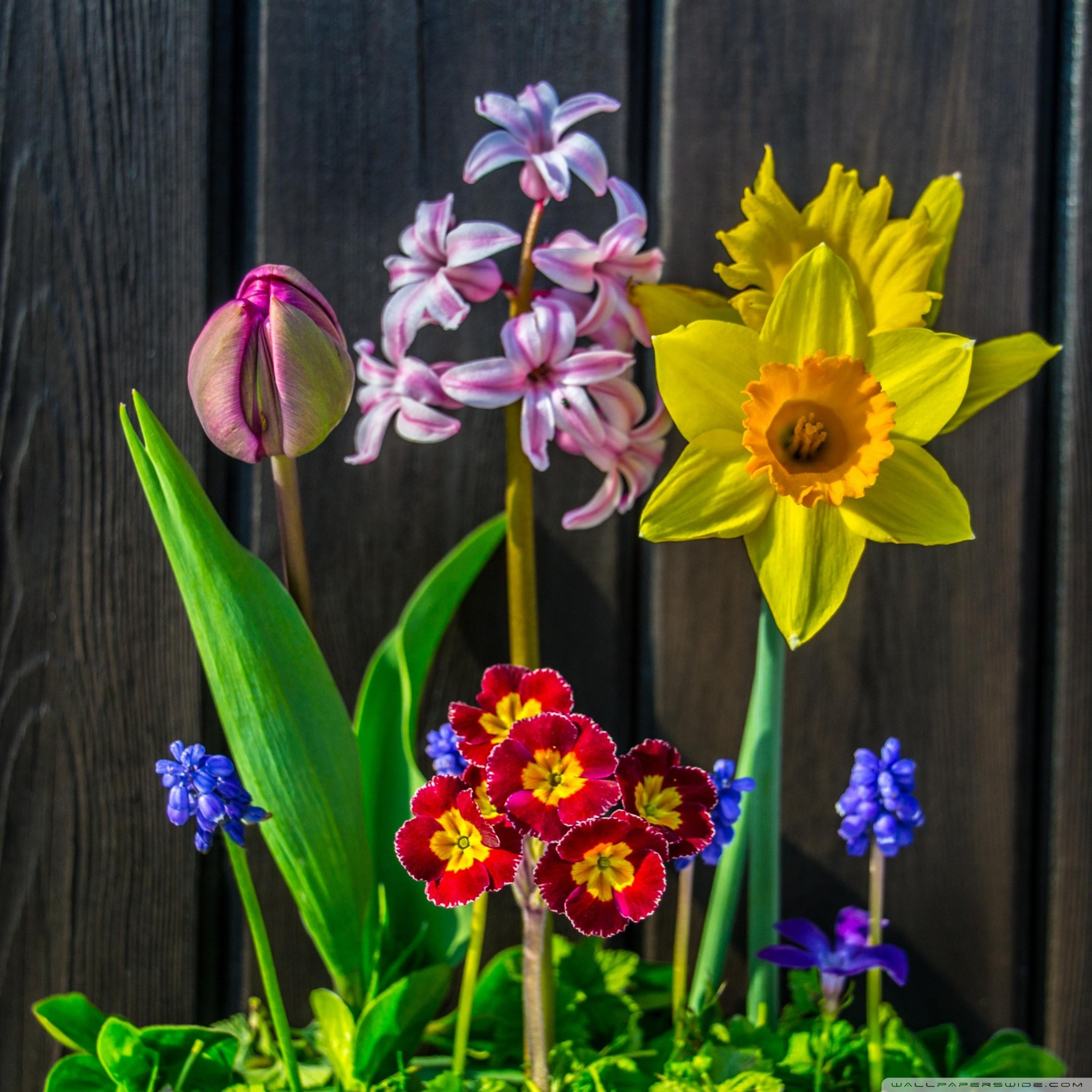 Beautiful Spring Flower Backgrounds Flowers Healthy