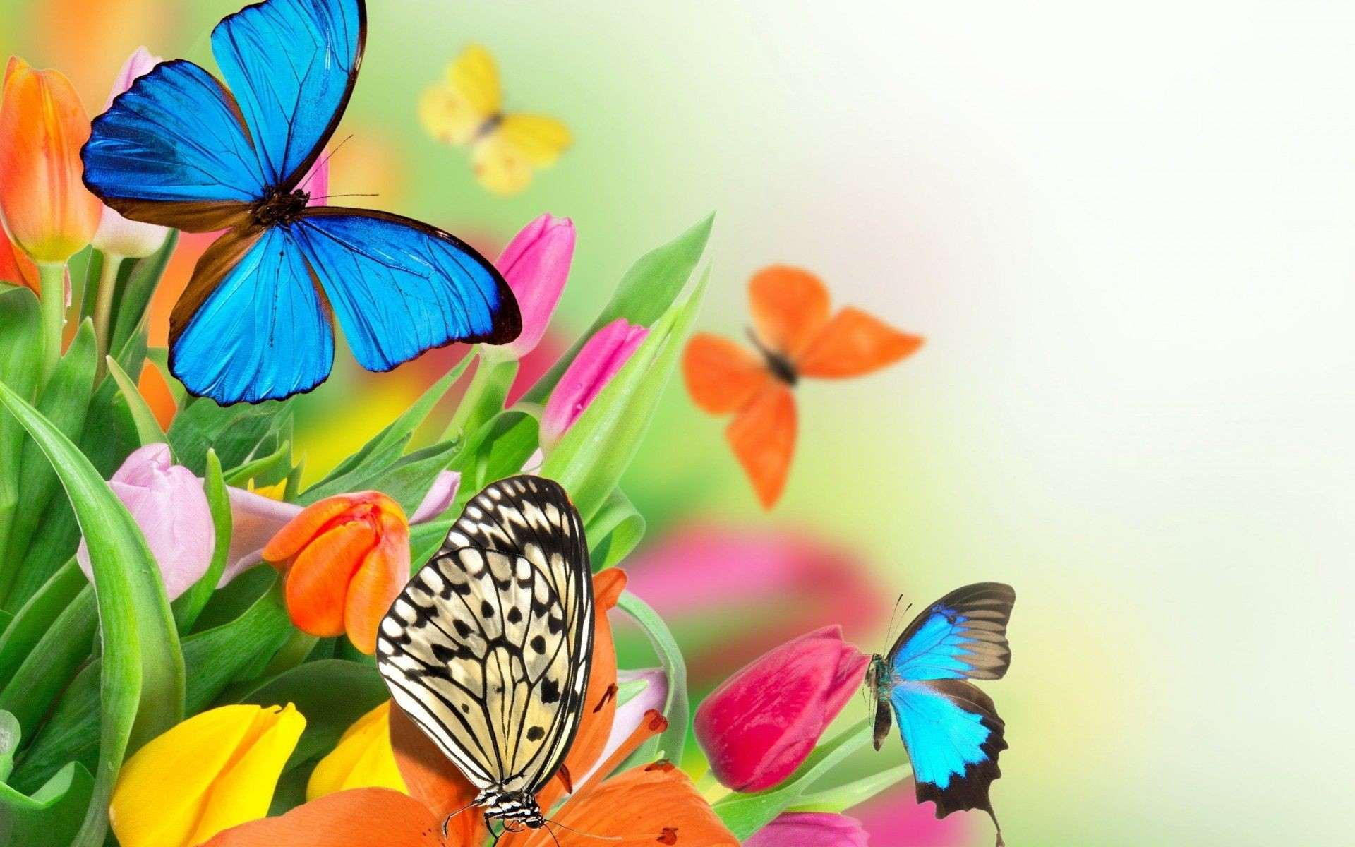 66+ Butterfly backgrounds ·① Download free stunning High ...