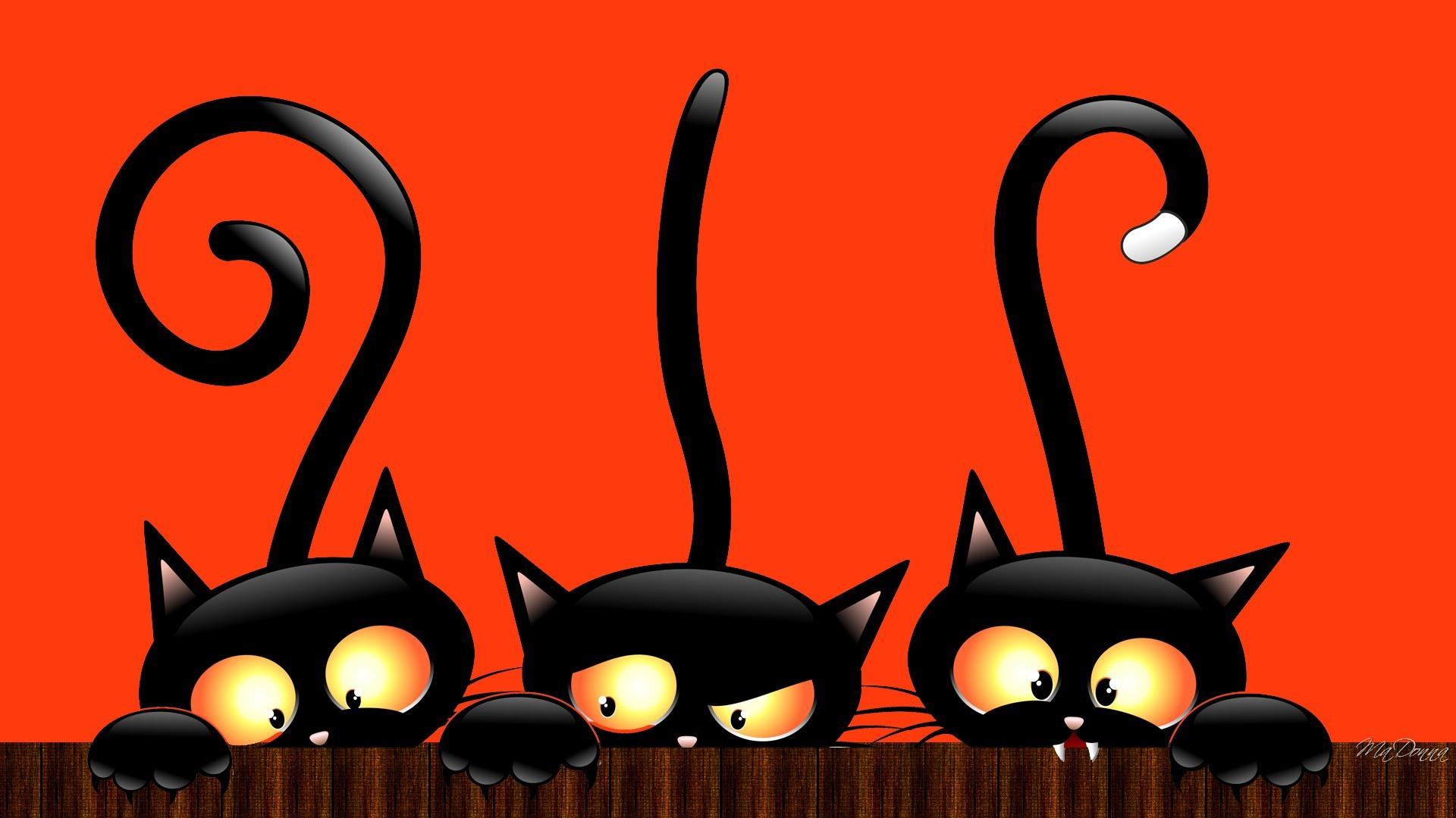 Halloween Cat HD Wallpaper, Background ...