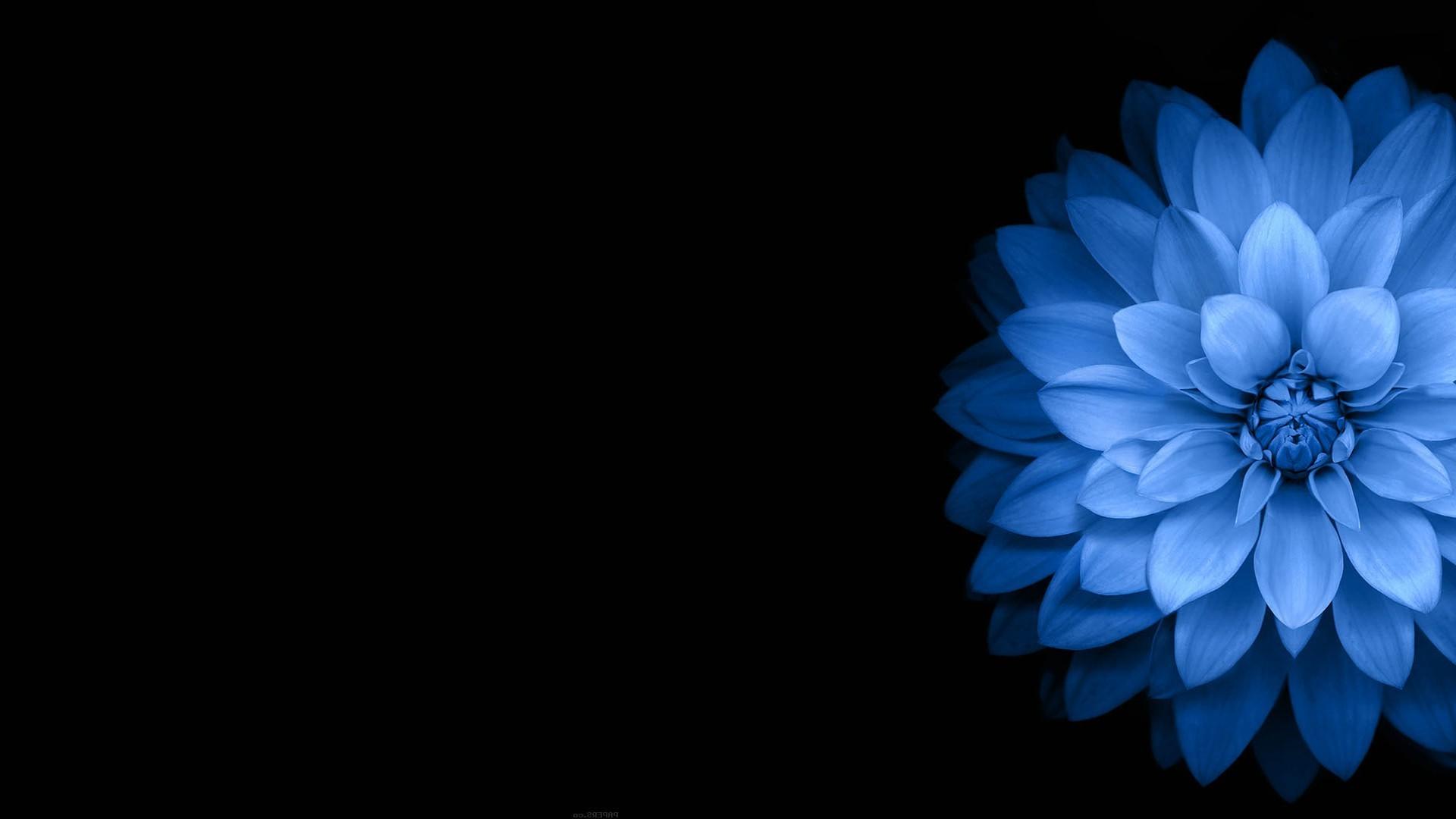 Dark Blue And White Flowers: Dark Flower Wallpaper ·① WallpaperTag