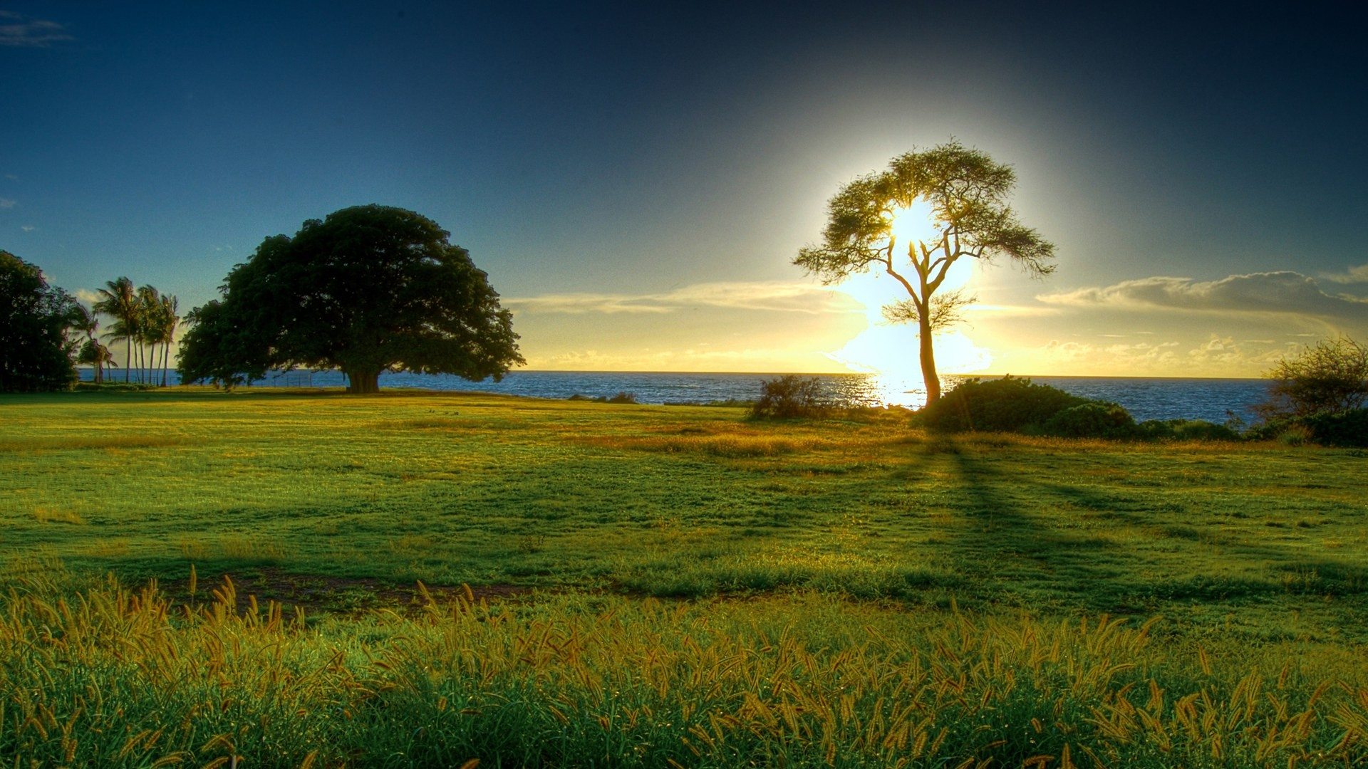 1920x1080 Nature Hd Wallpaper 1080 High Definition Wallpapers