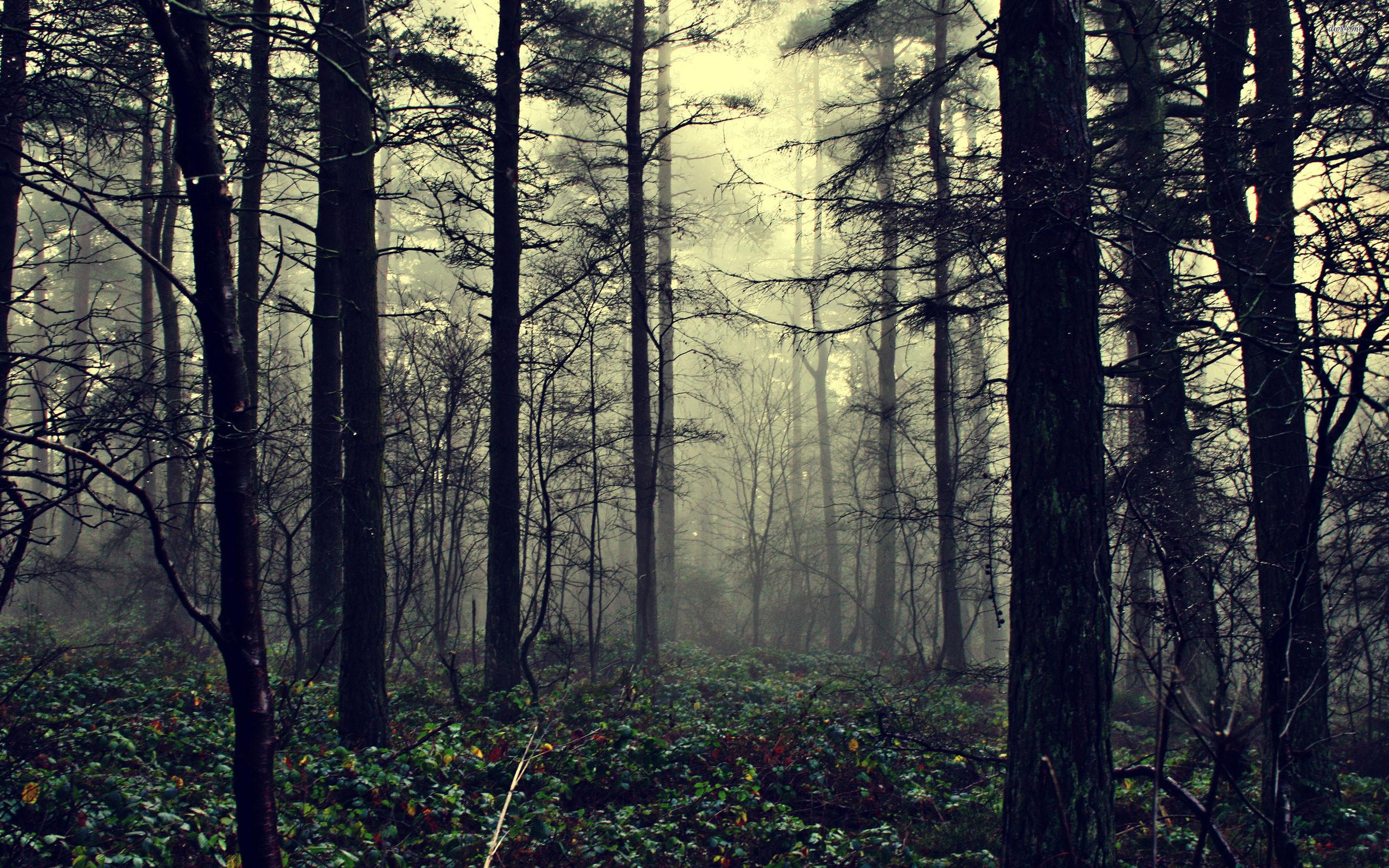Forest Desktop Background 1