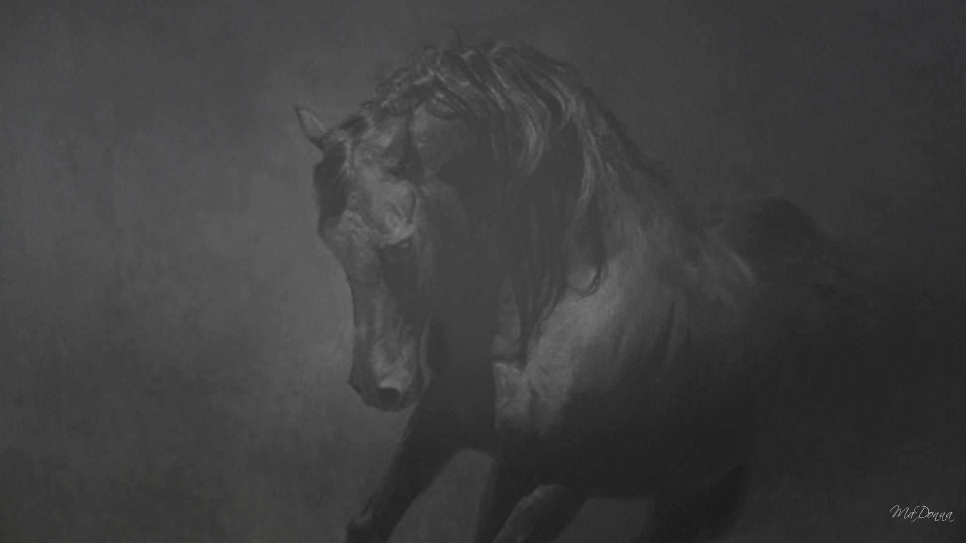 Friesian Horse Wallpaper 59 Images