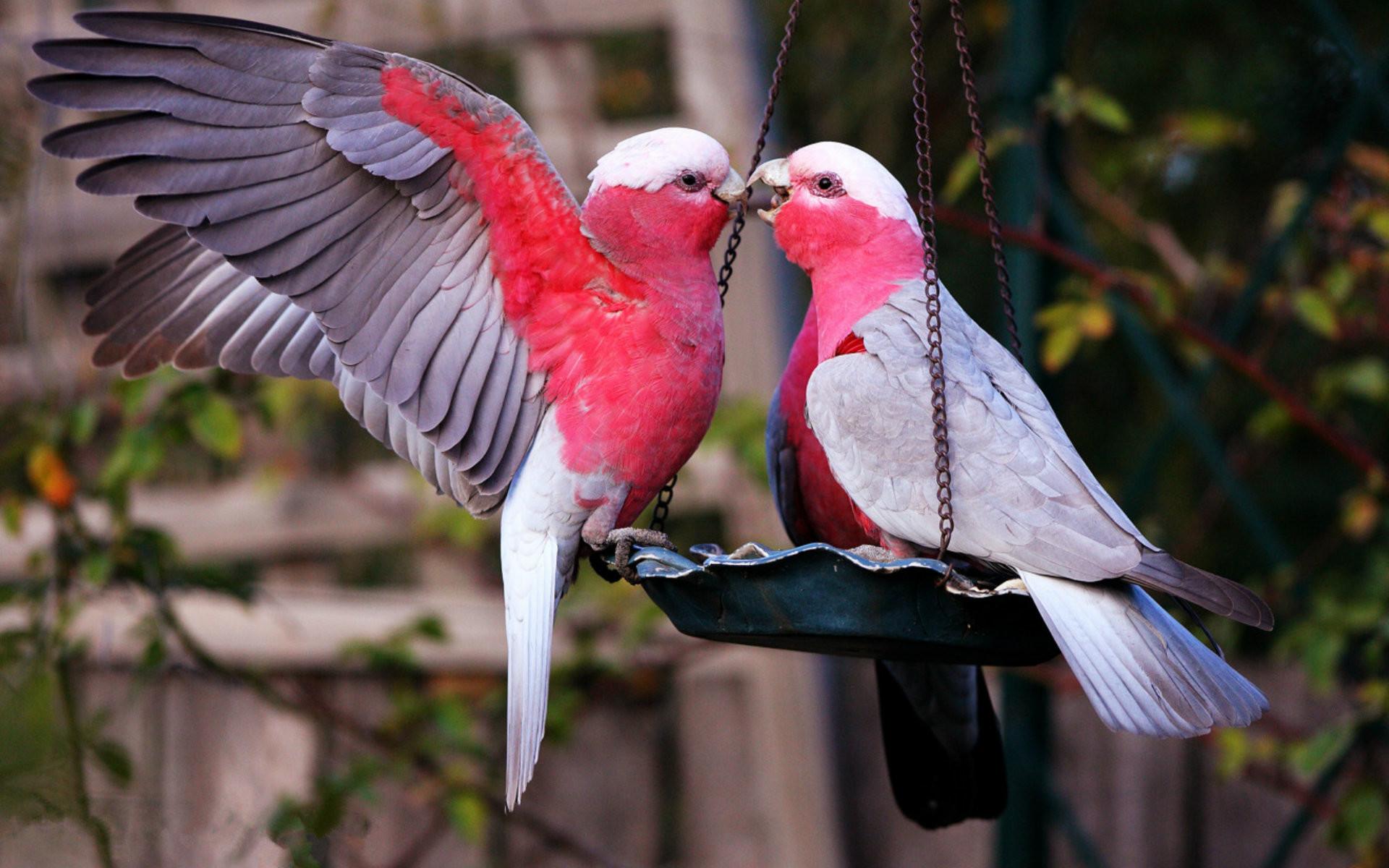 Lovely Birds Wallpaper