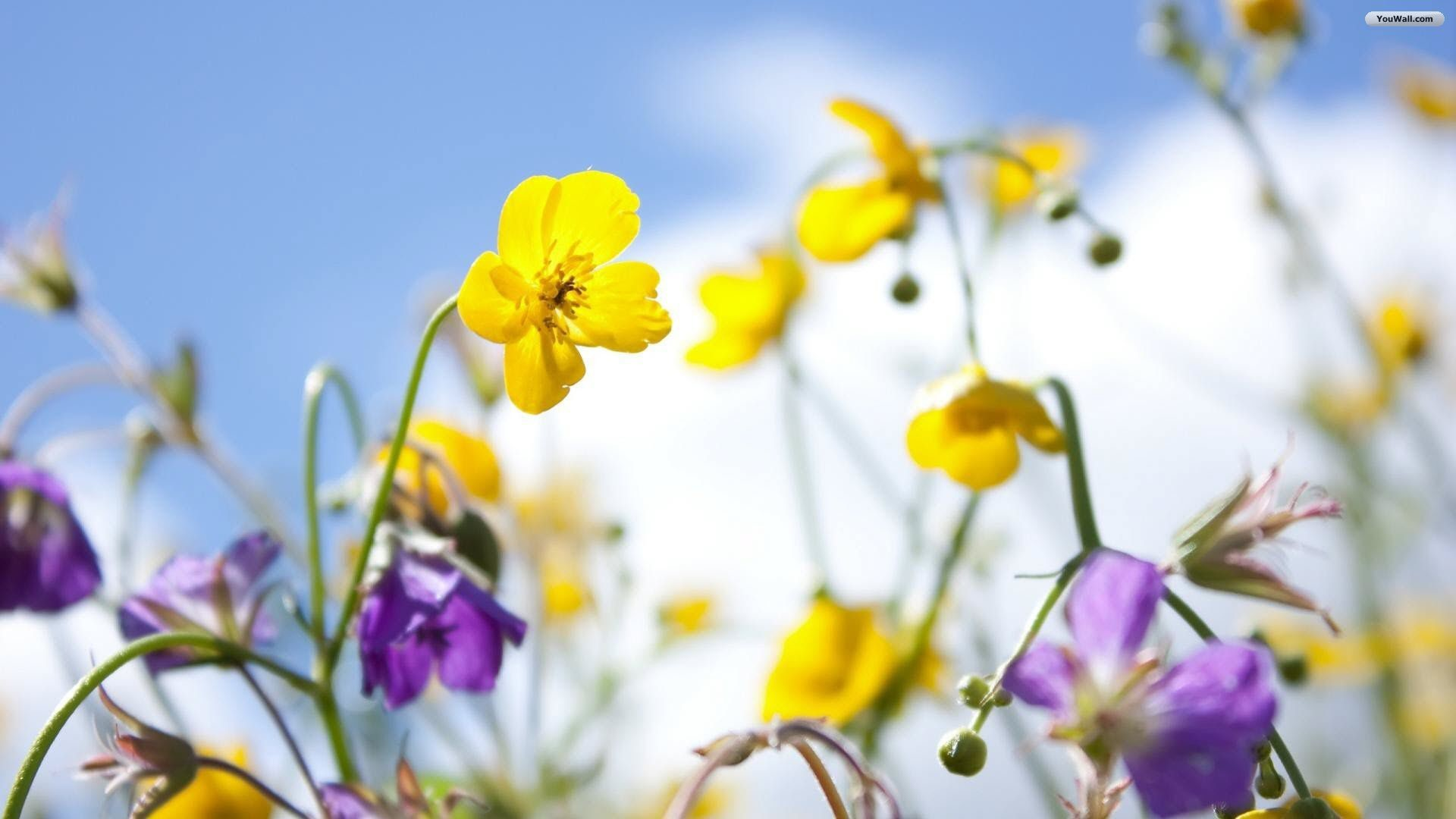 Desktop wallpaper spring flowers 10 mightylinksfo