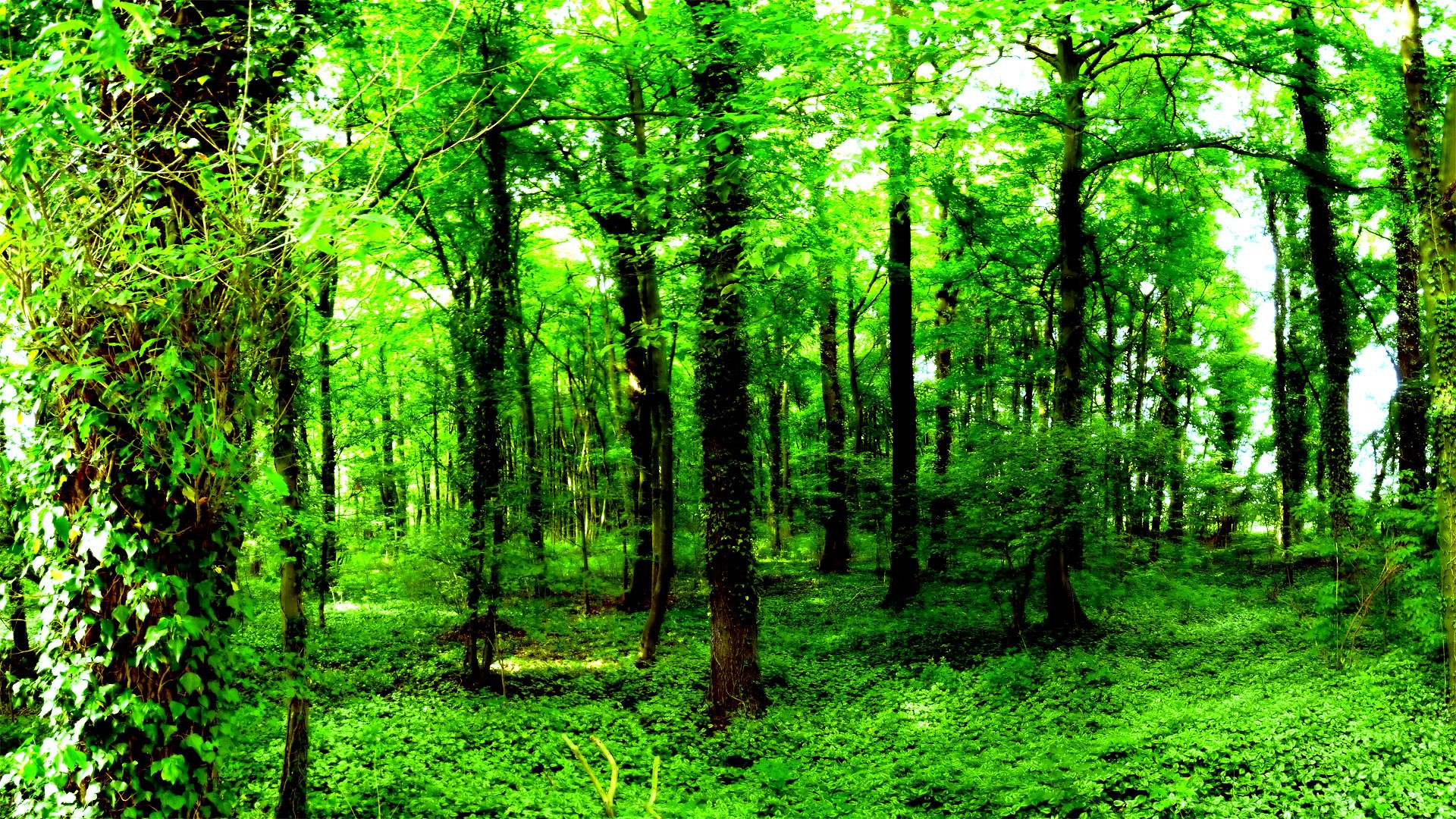 Forest Wallpaper HD ·① Download Free Awesome Backgrounds