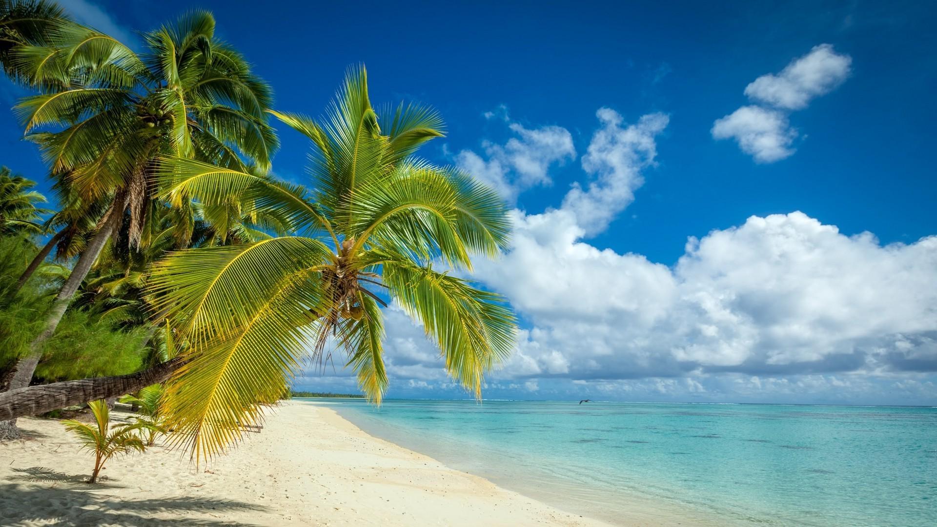 берег пальма море солнце пляж  № 3779780  скачать