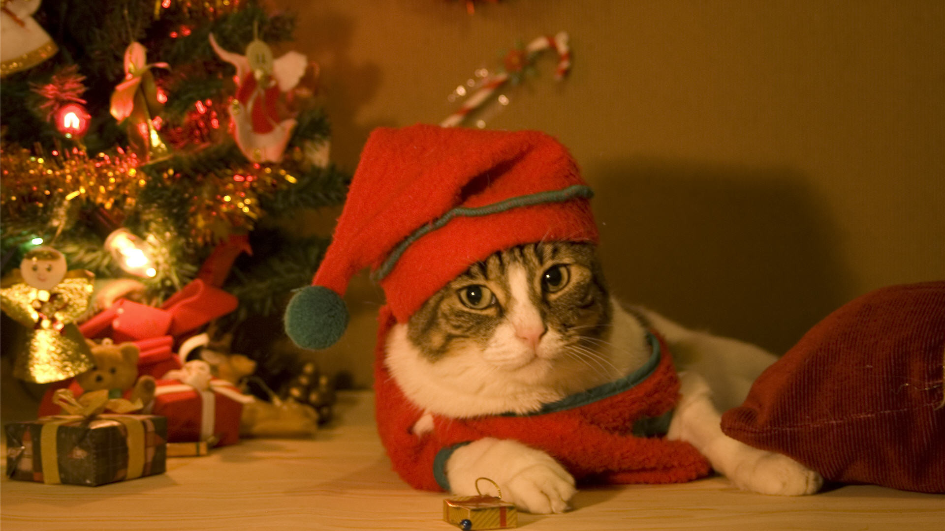 Christmas Cat Wallpaper Wallpapertag