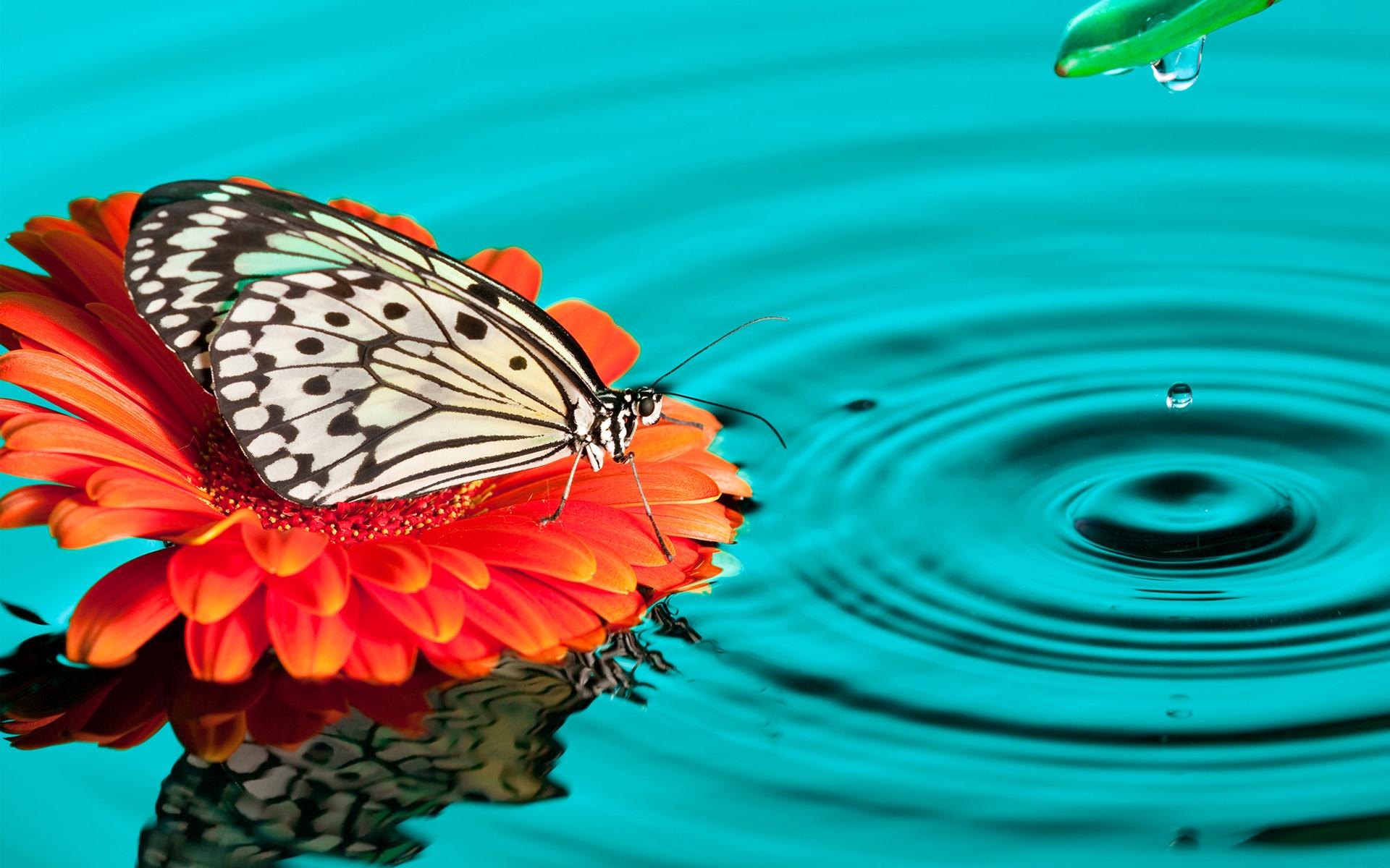Butterfly Computer Wallpaper ·① WallpaperTag