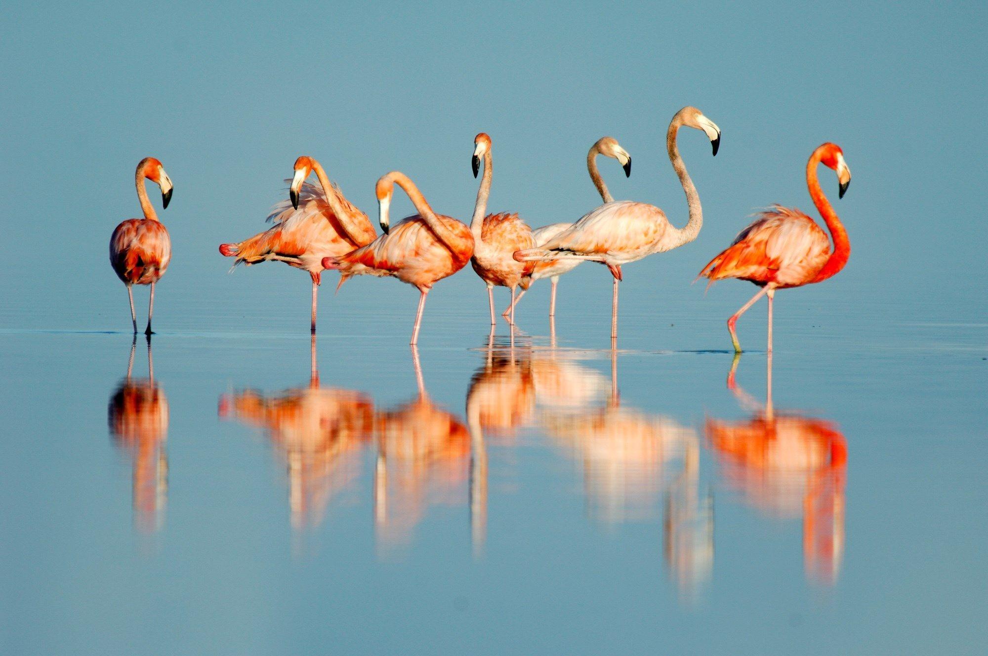 Flamingo Wallpaper Wallpapertag