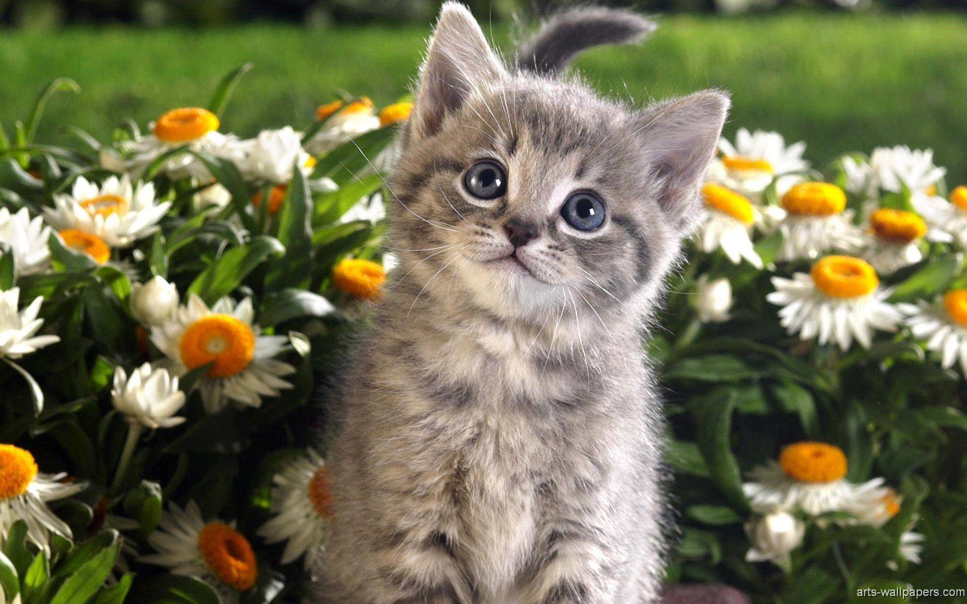 Kittens wallpaper download free stunning full hd - Free wallpaper of kittens ...