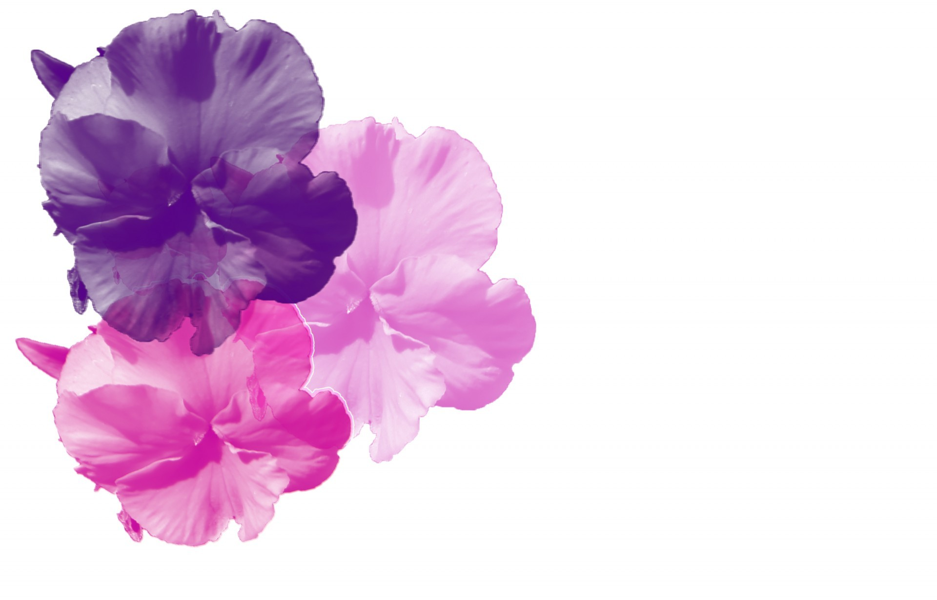 Pink And Purple Background 183 ①