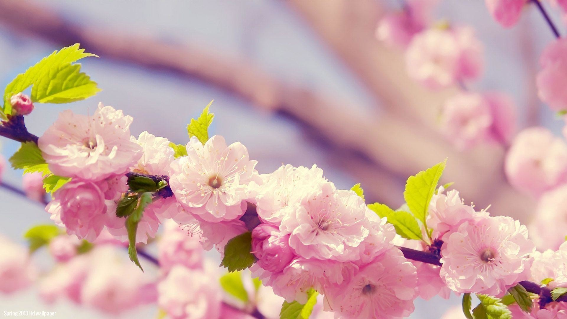 spring animals desktop wallpaper ·①