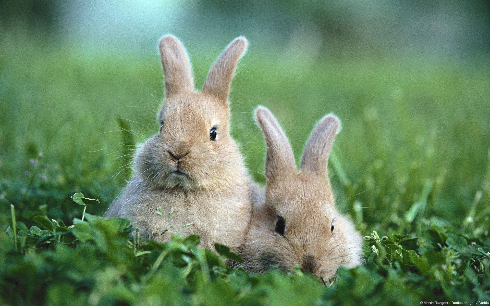 Baby Bunny Wallpaper ·① WallpaperTag