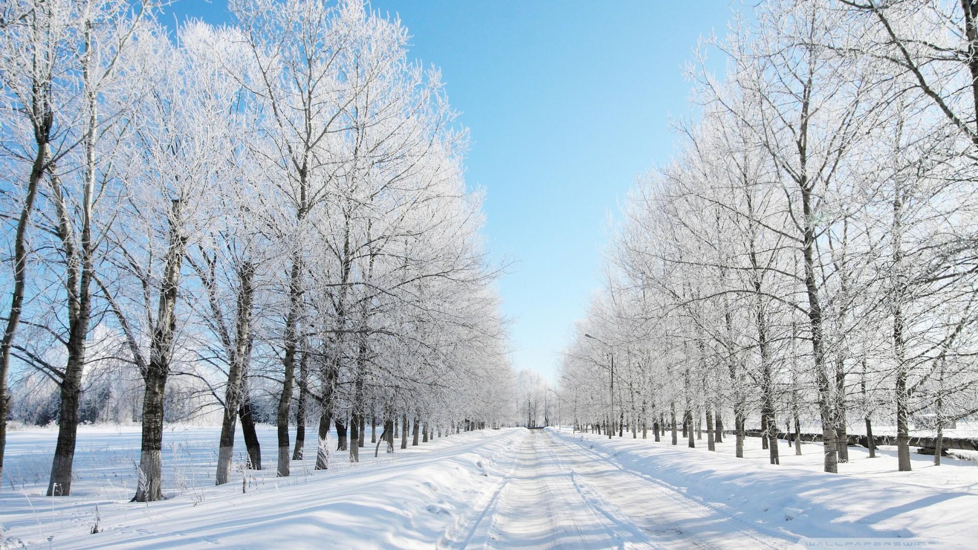 1920x1080 Beautiful Snow Hd Image Widescreen Natural Wallpaper