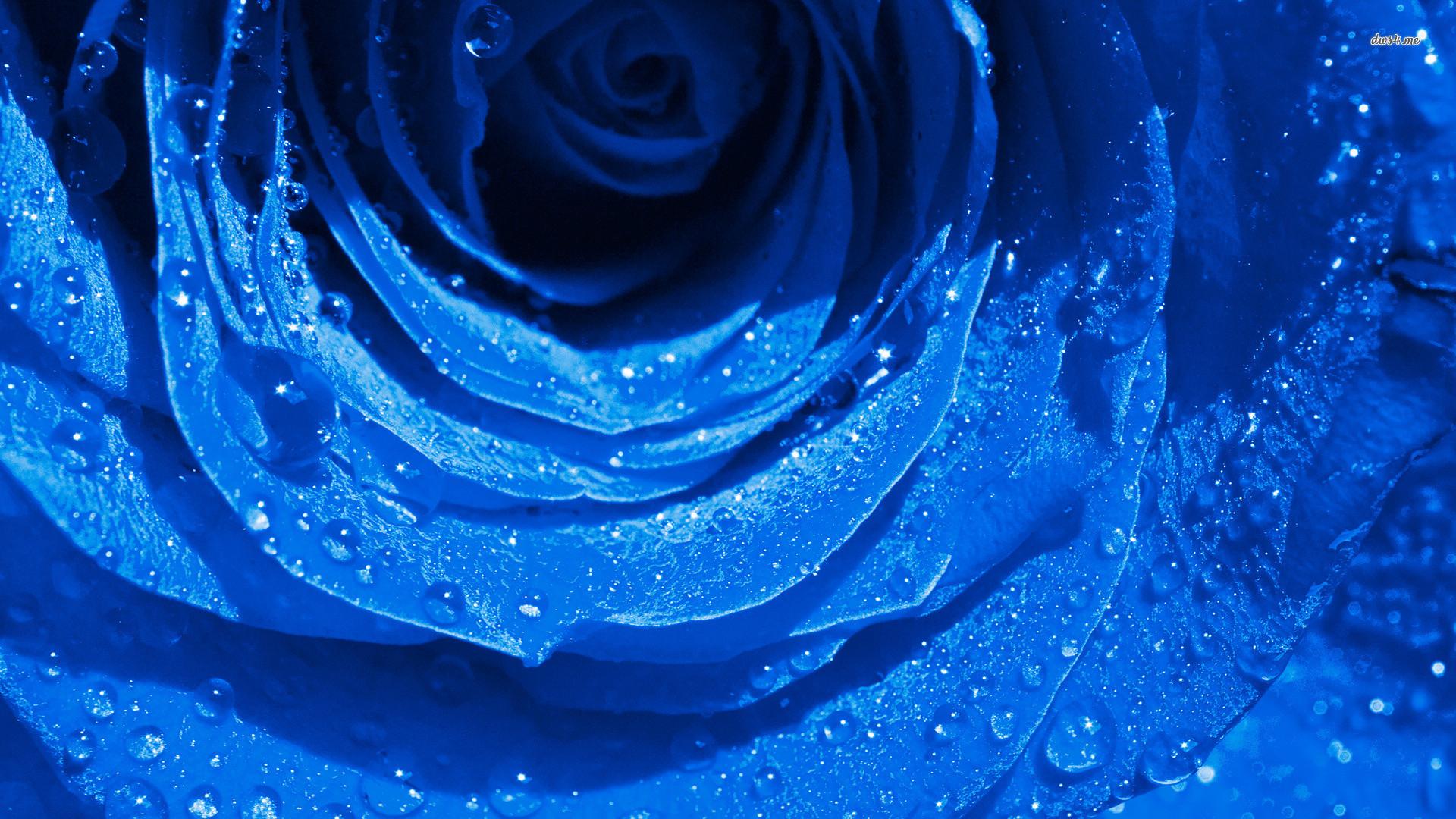 Xiaomi Wallpaper Blue Black: Blue Rose Background ·①
