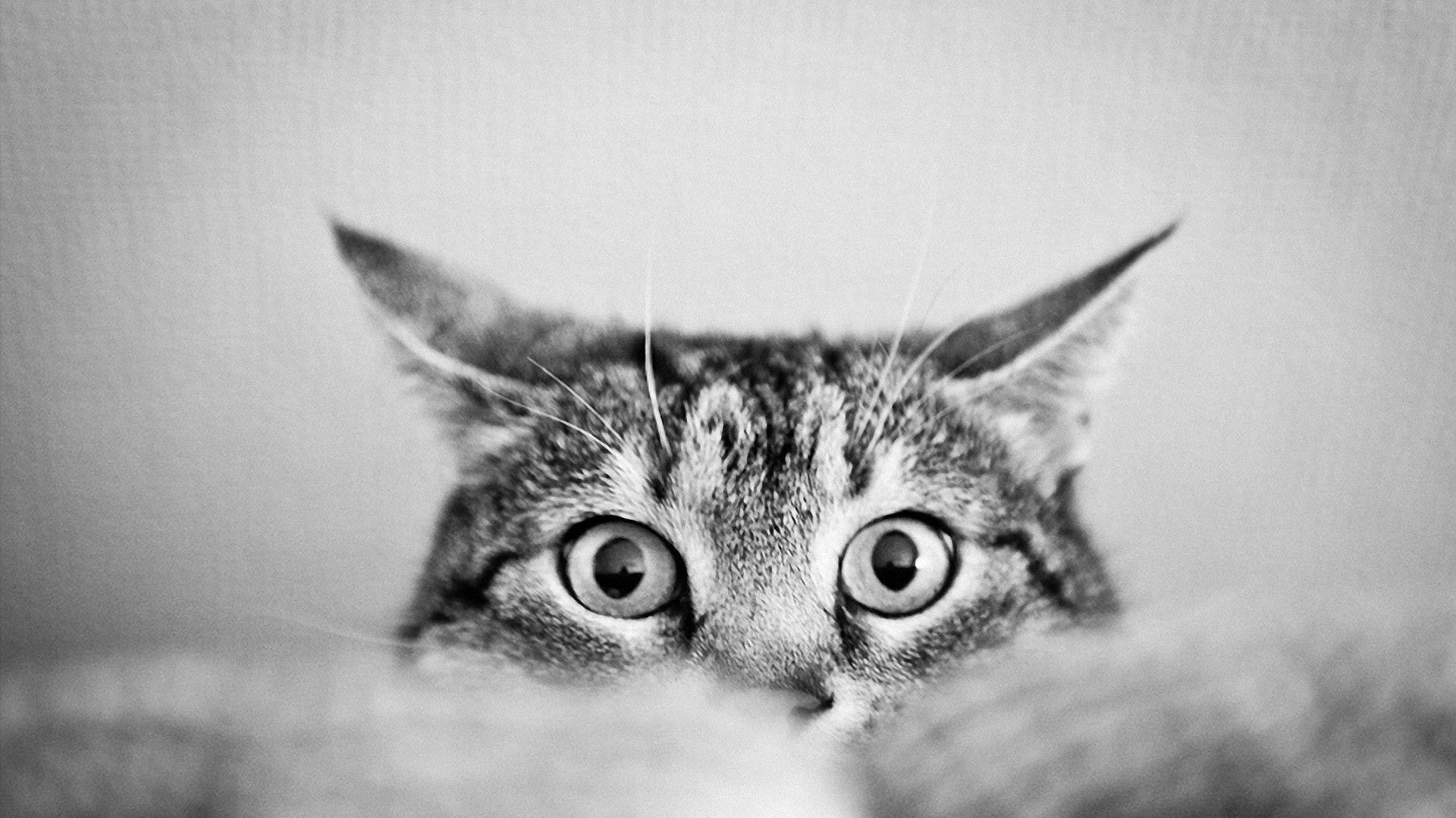 1920x1080 Images For > Black And White Cat Photography Wallpaper