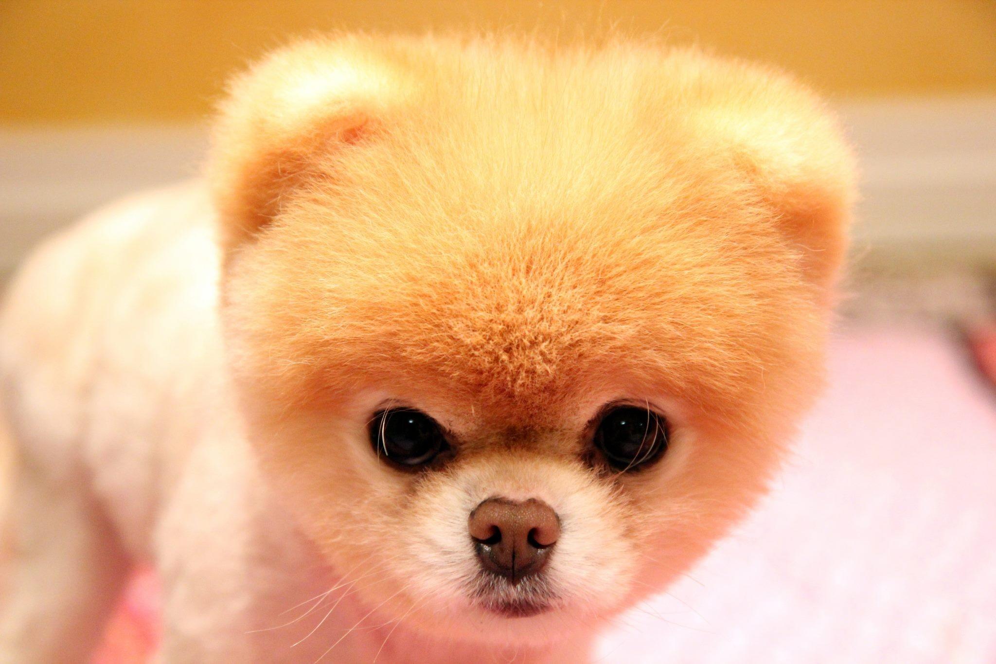 Открытки, картинка самой милой собаки