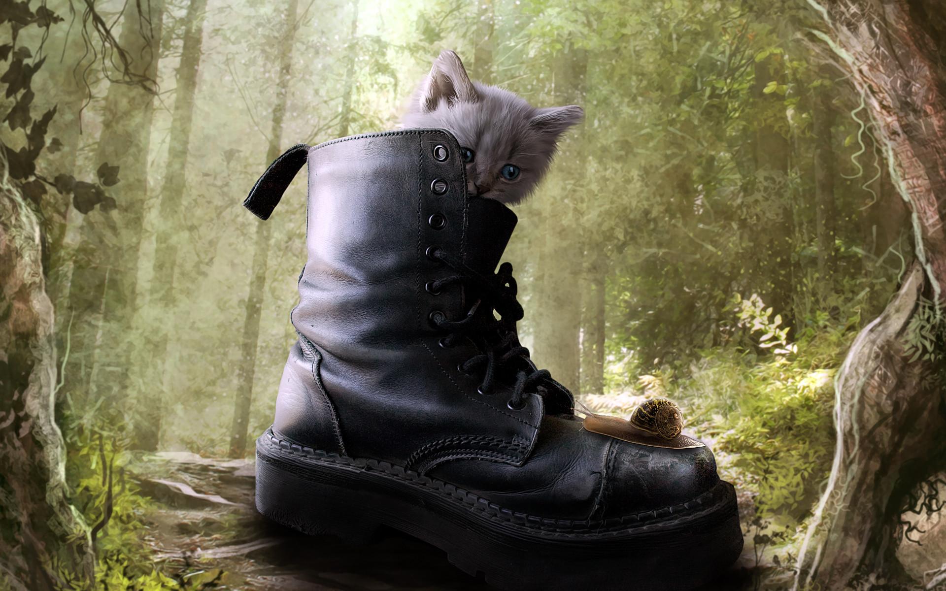 котенок в ботинке  № 2016501 без смс