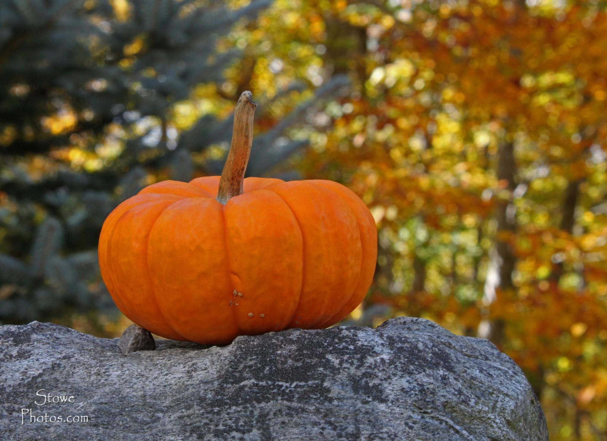 Cute Pumpkin Desktop Wallpaper download ...