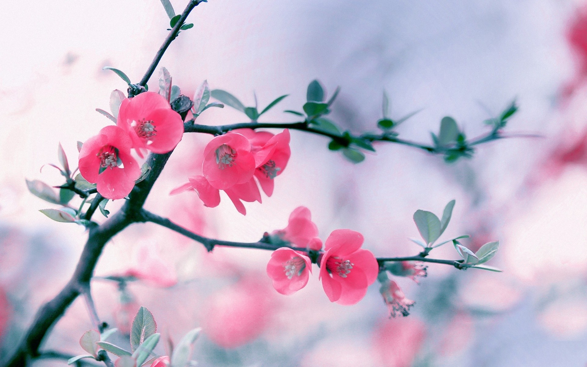 flower wallpaper 1920x1080 download free