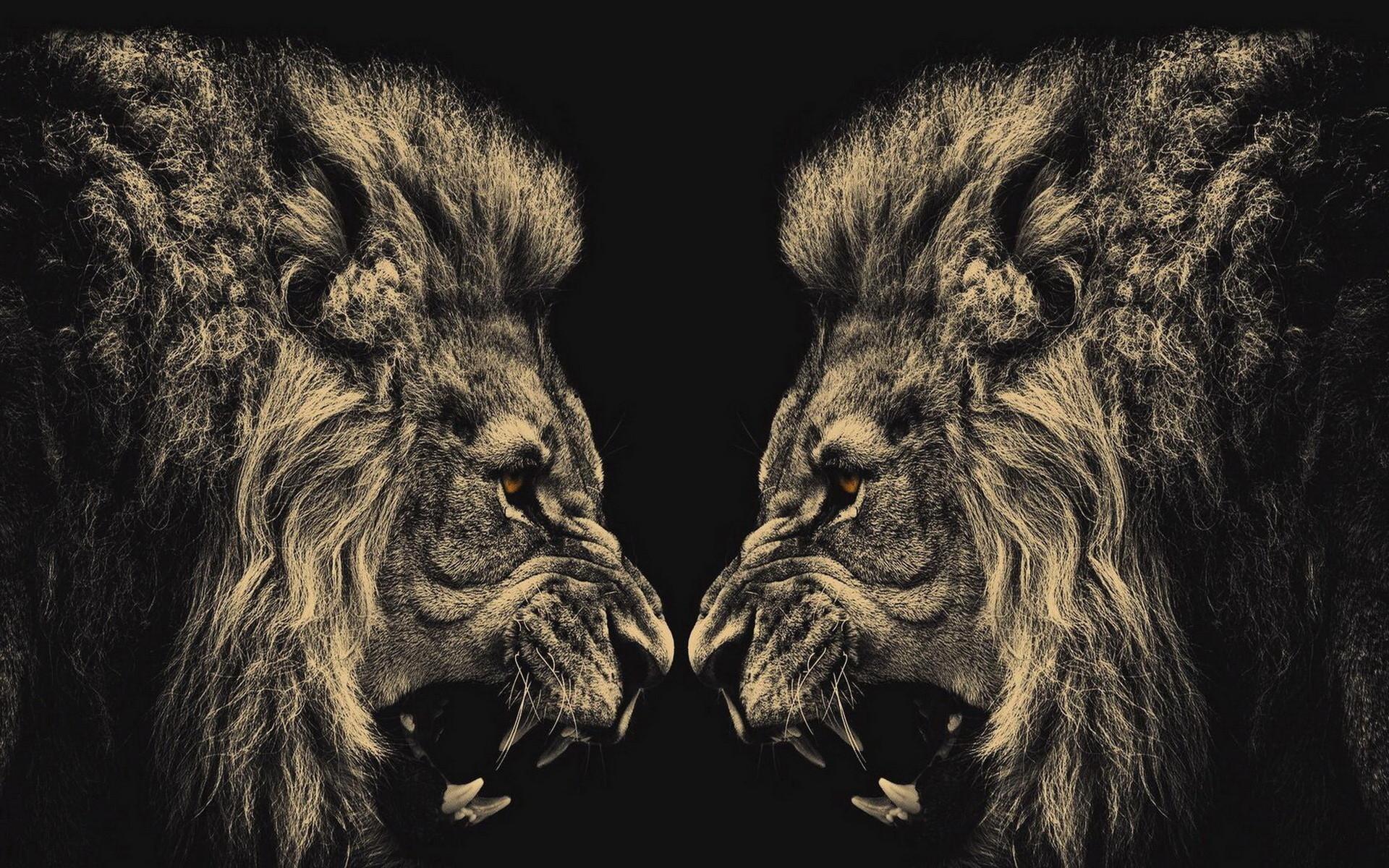 Lion Hd Wallpaper Download Wallpaper Desktop Hd