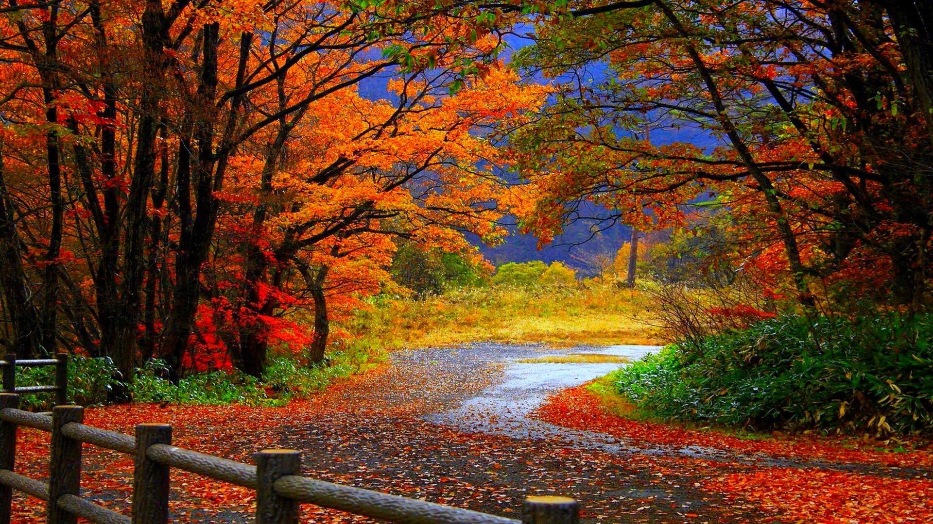 Wallpaper Scenes Adorable Desktop Wallpaper Fall Scenes ·①
