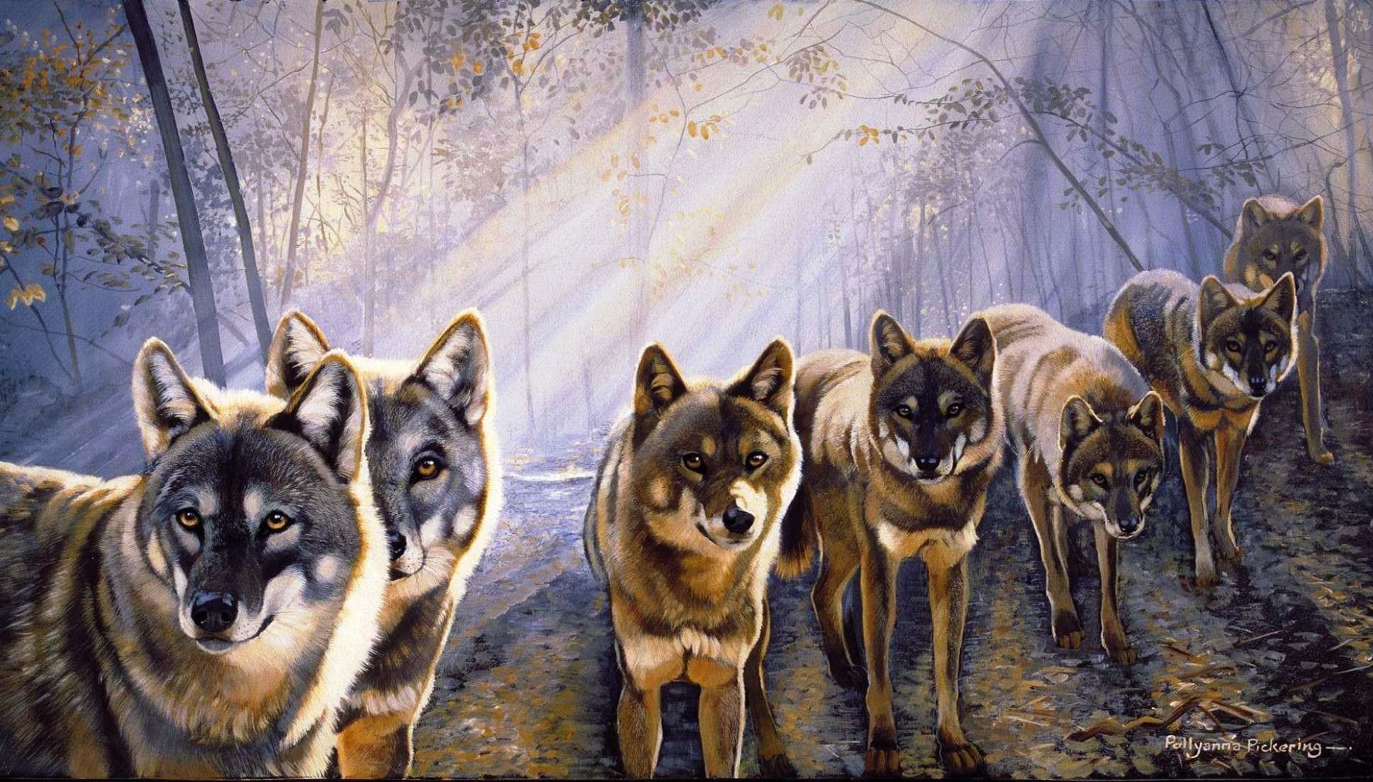 Wolfpack Wallpaper Wallpapertag