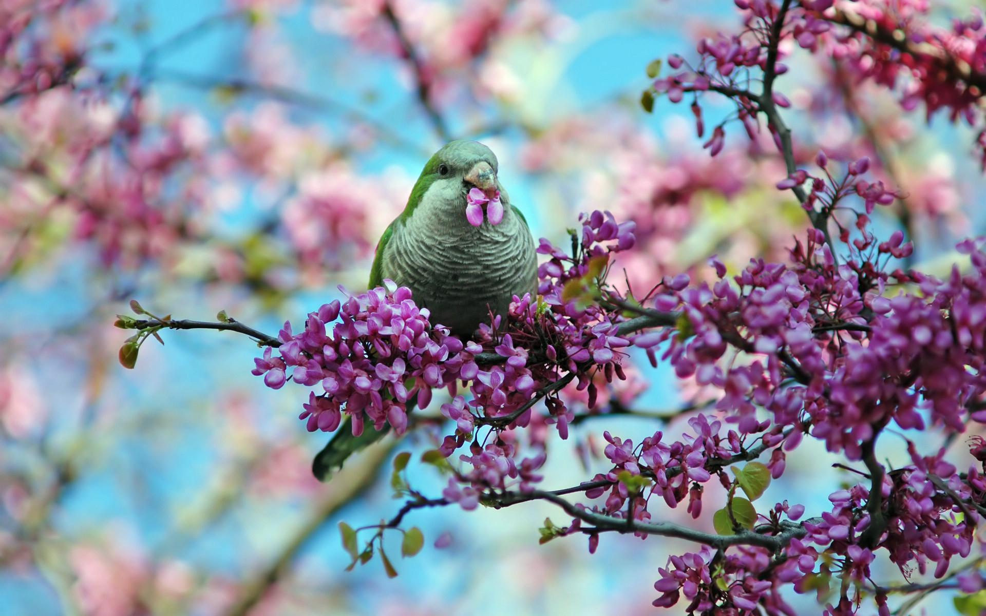 Spring Theme Wallpaper ·①