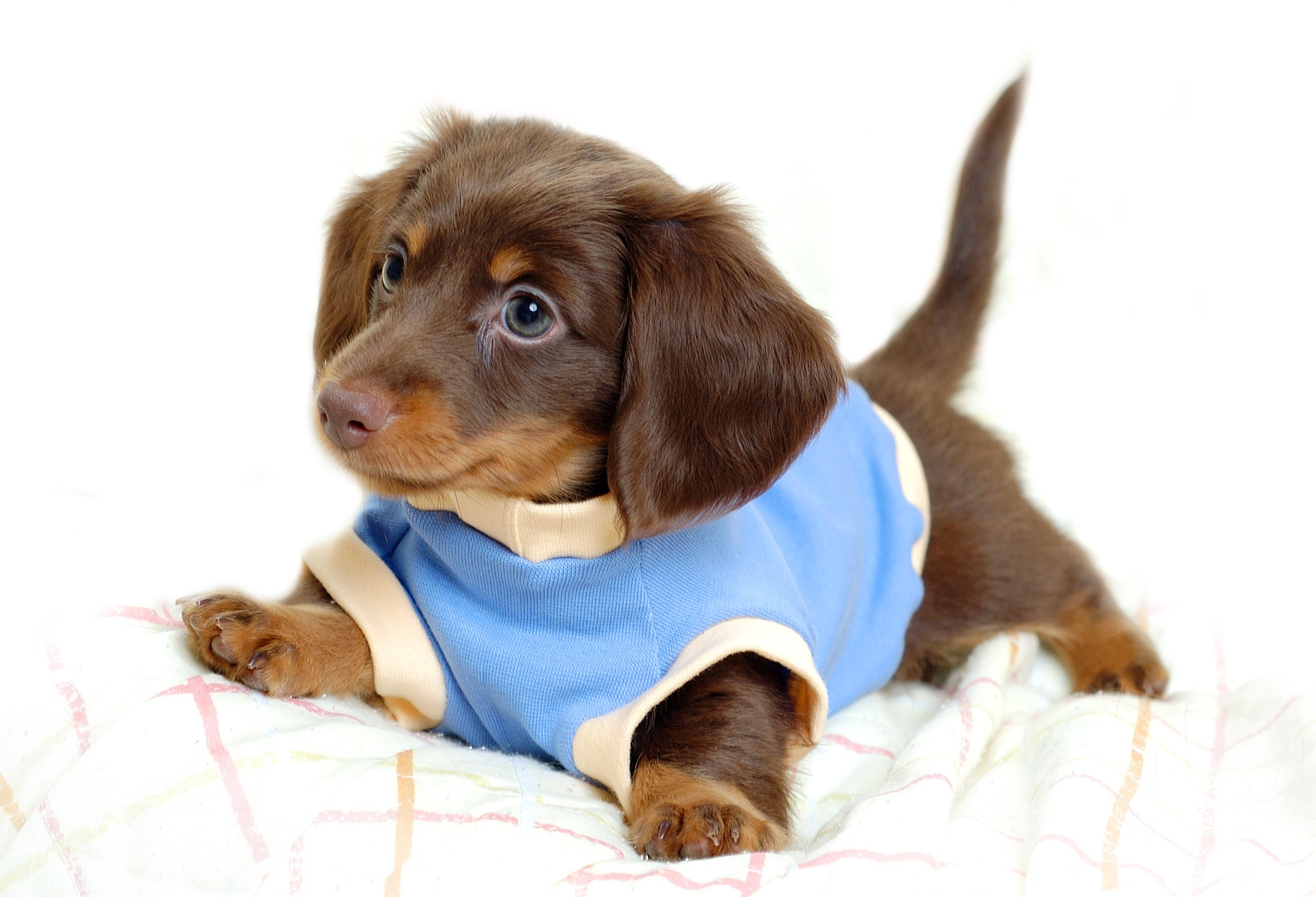 puppy wallpaper download free cool backgrounds for desktop