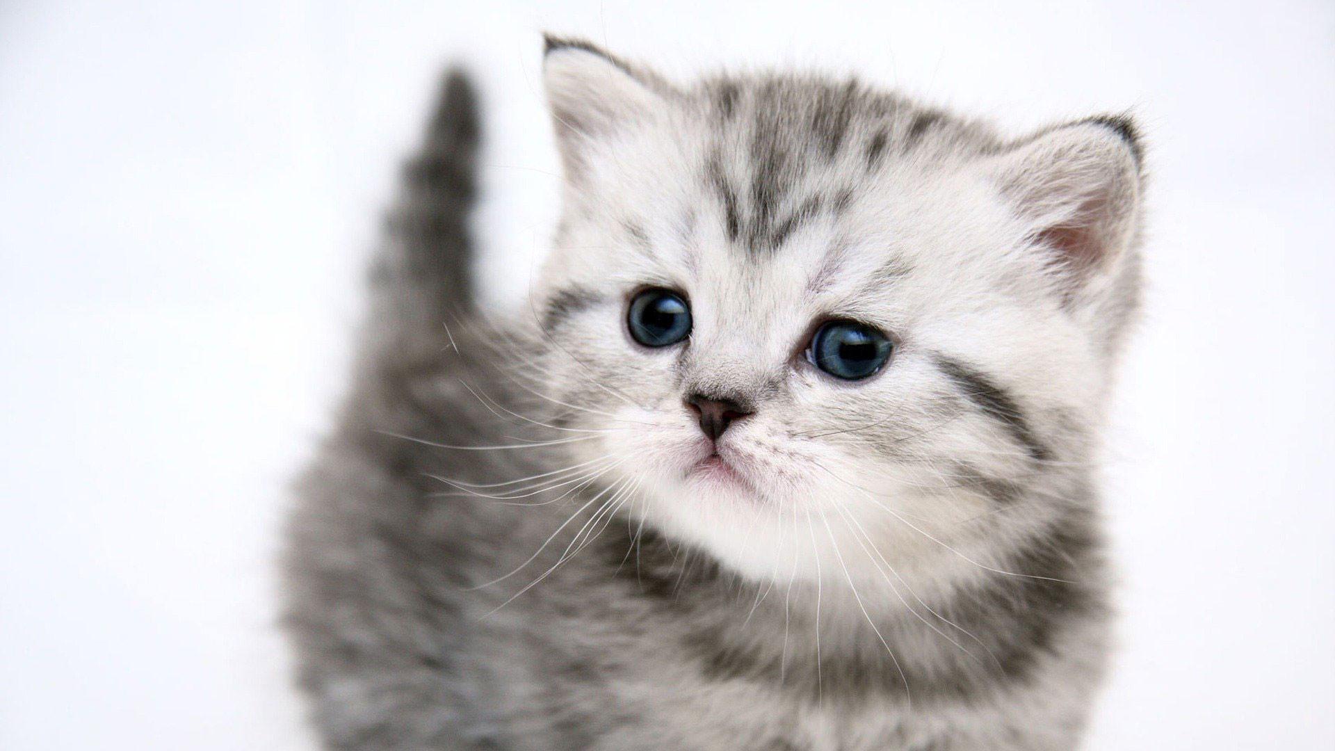 Cute Cats Wallpaper Wallpapertag
