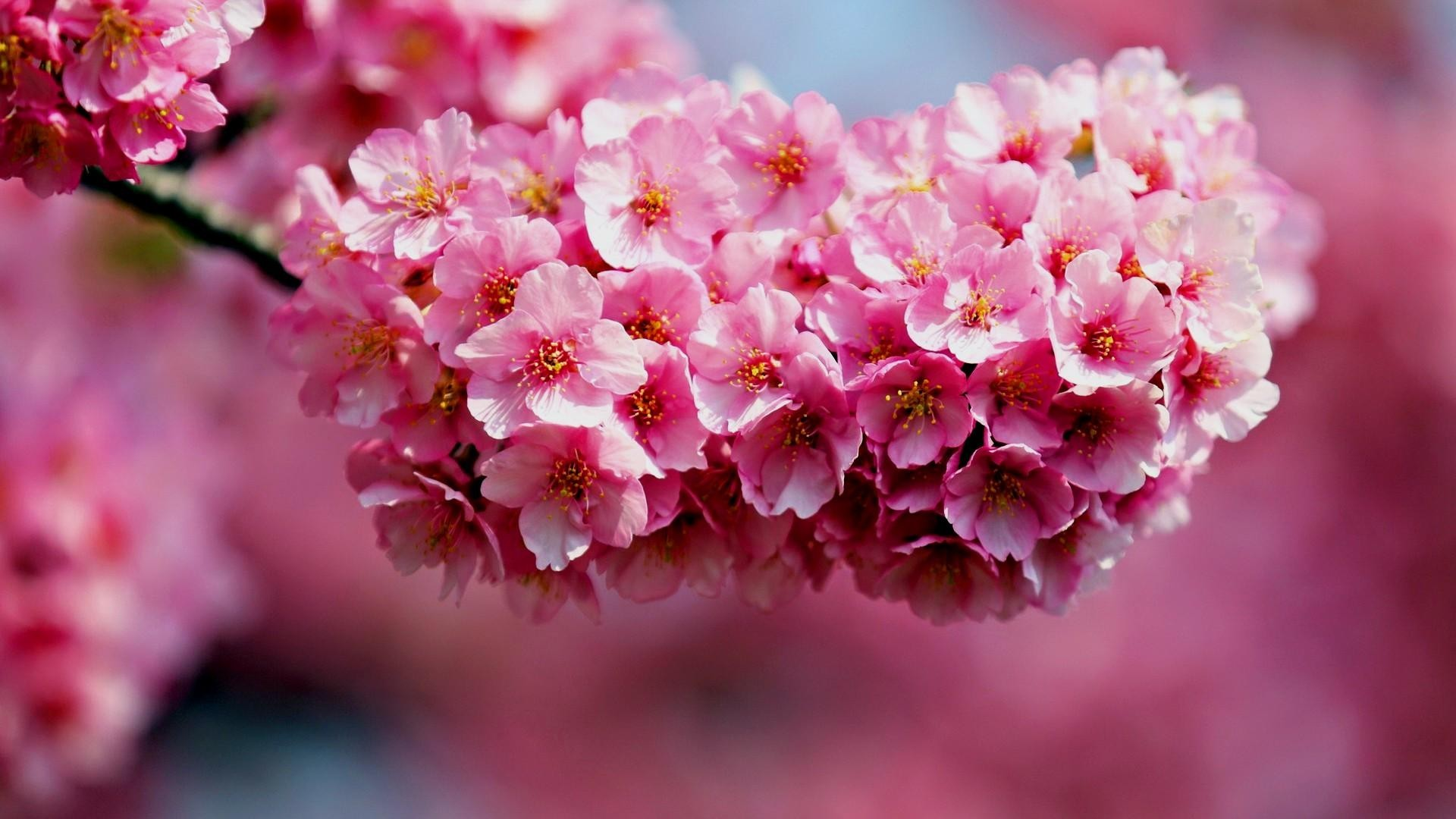 Pictures Of Flowers For Desktop Background ·① WallpaperTag