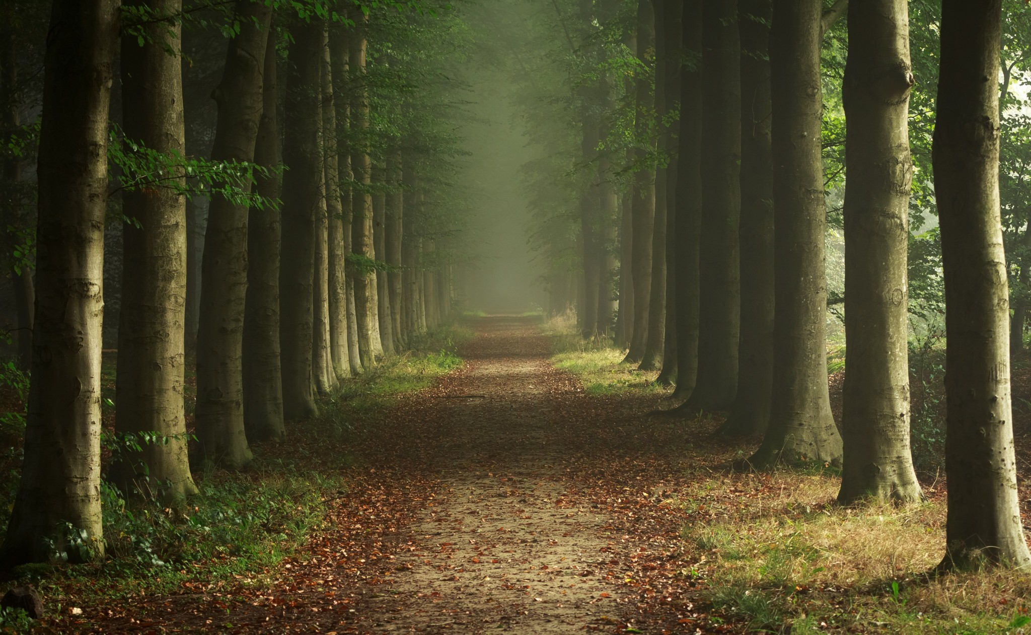 how to make a forest look burnt photoshop