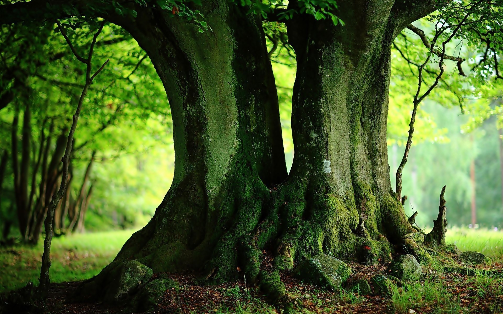 Tree background images for Tree wallpaper for walls