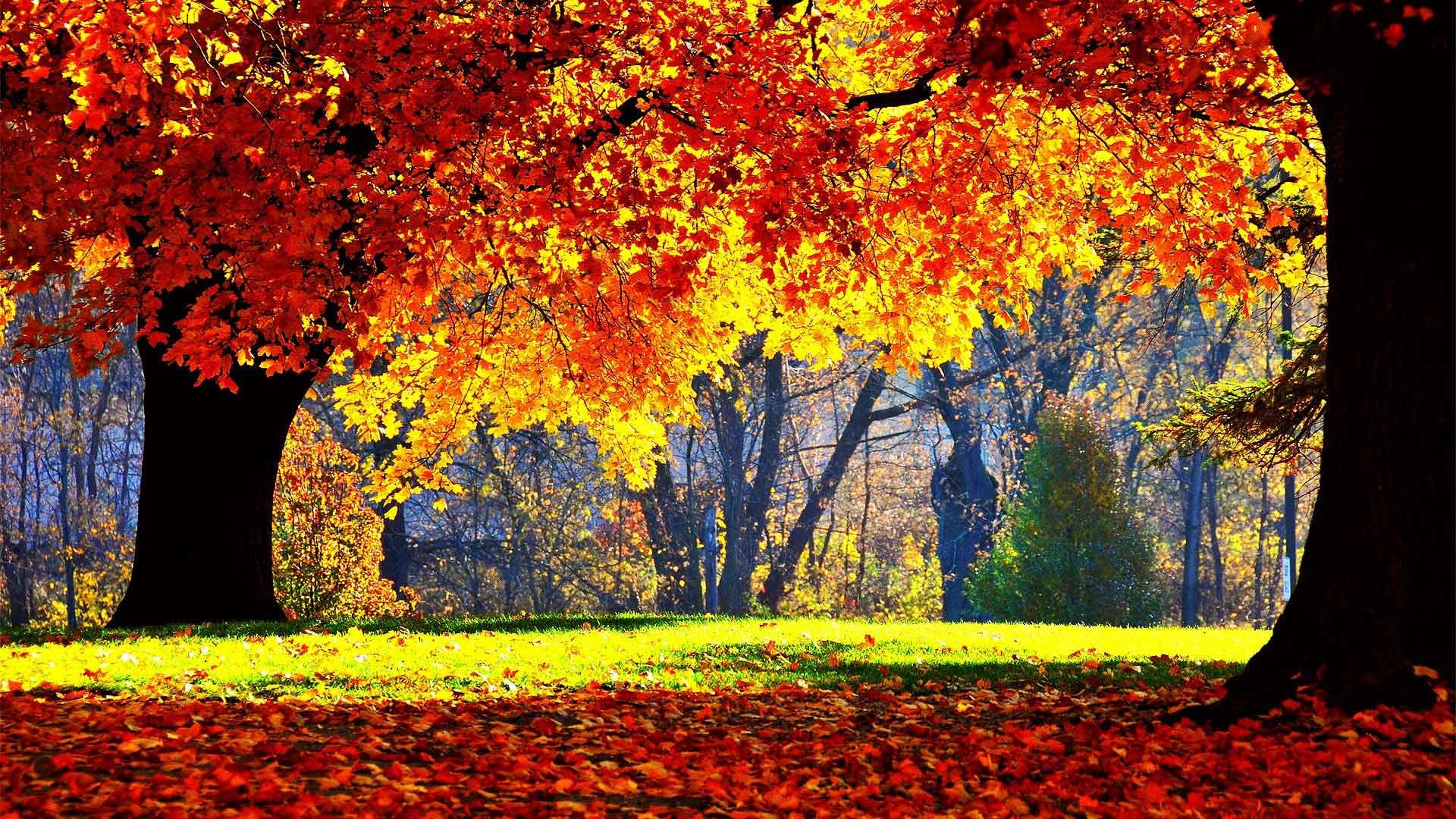 autumn season - photo #39